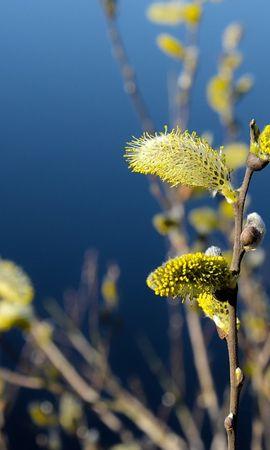 21165 скачать обои Растения, Цветы, Деревья - заставки и картинки бесплатно