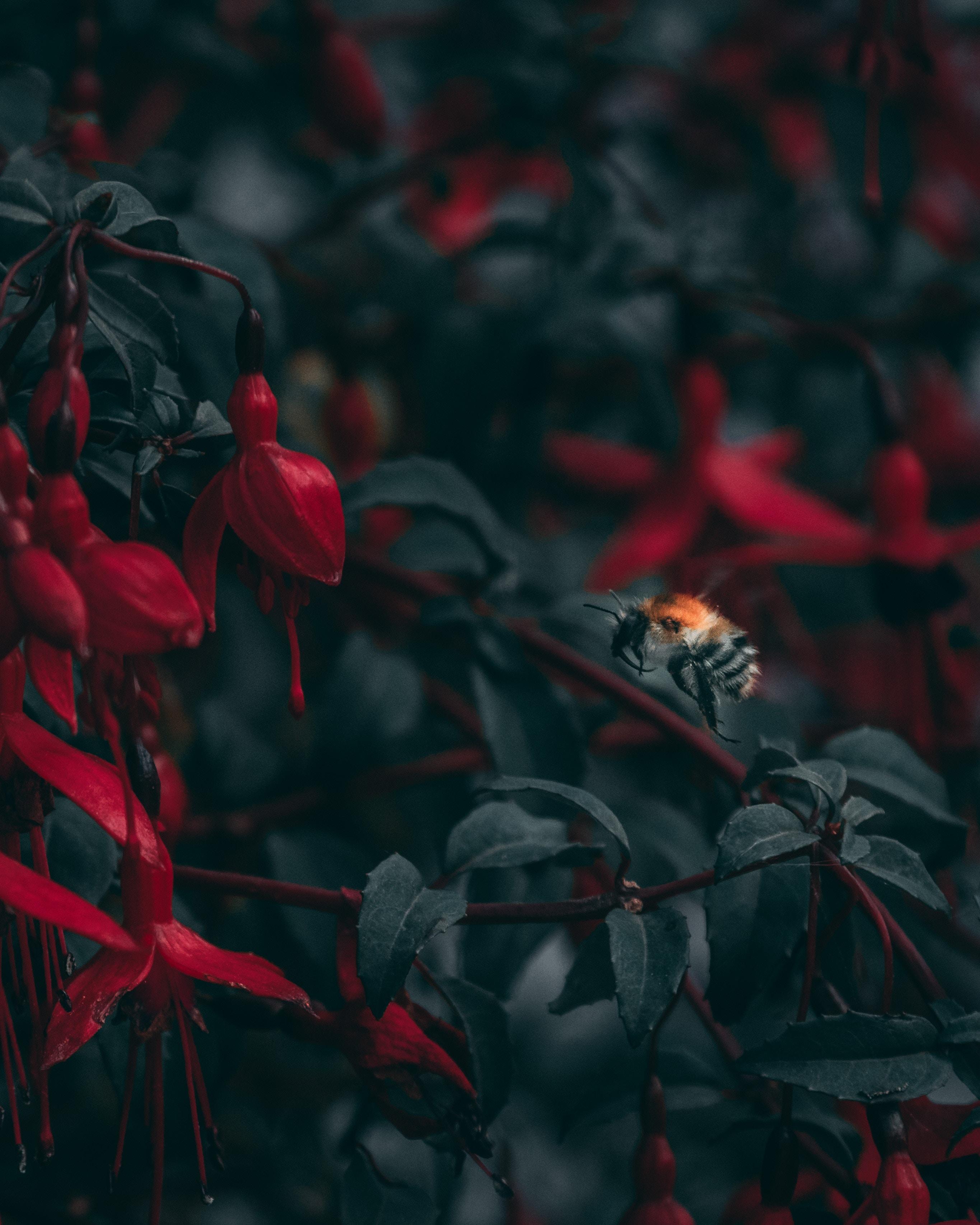 手機的89768屏保和壁紙昆虫。 免費下載 宏, 蜜蜂, 昆虫, 模糊, 无水, 特写, 花卉 圖片