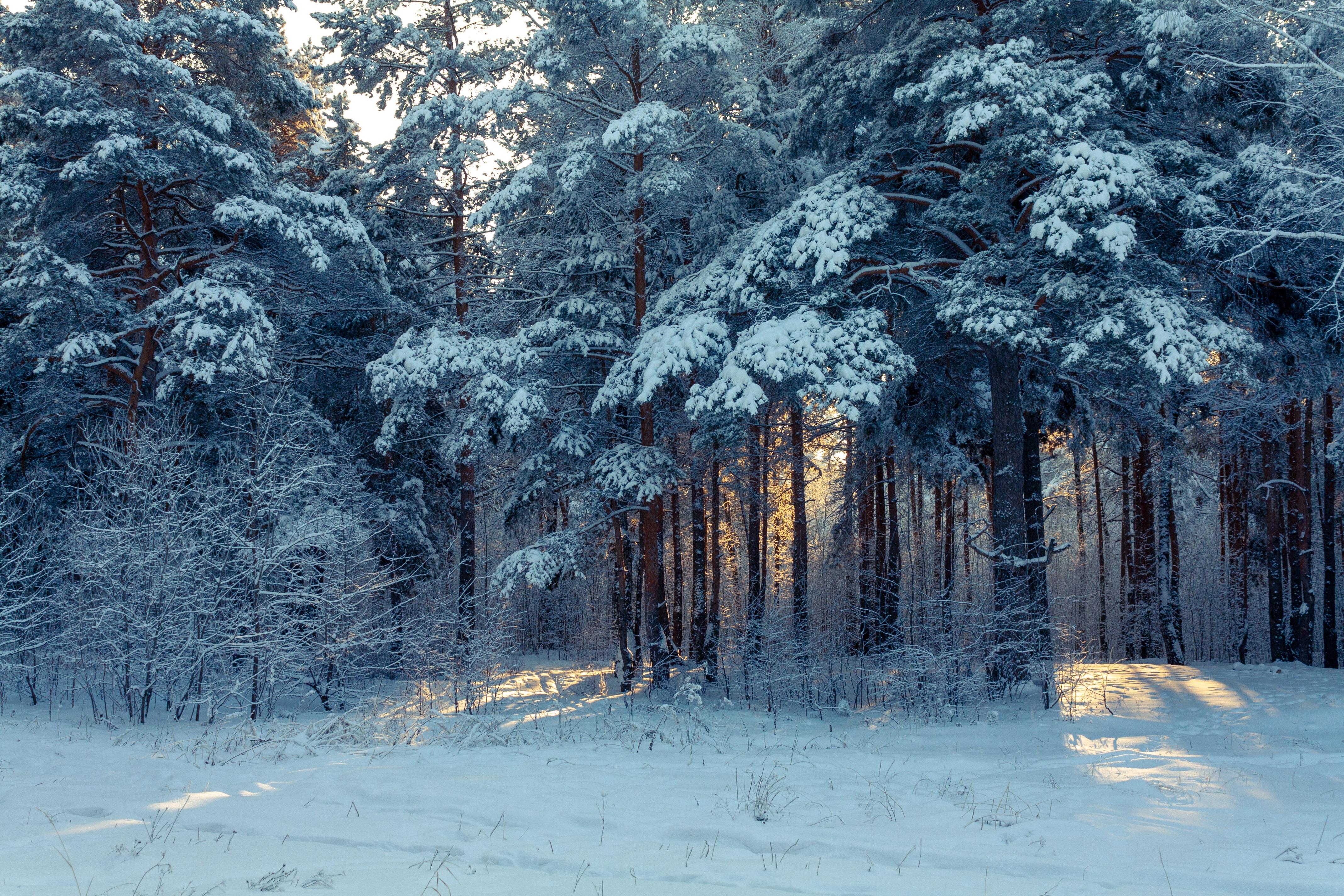 61733 скачать обои Зима, Лес, Снег, Природа, Деревья, Зимний Пейзаж - заставки и картинки бесплатно