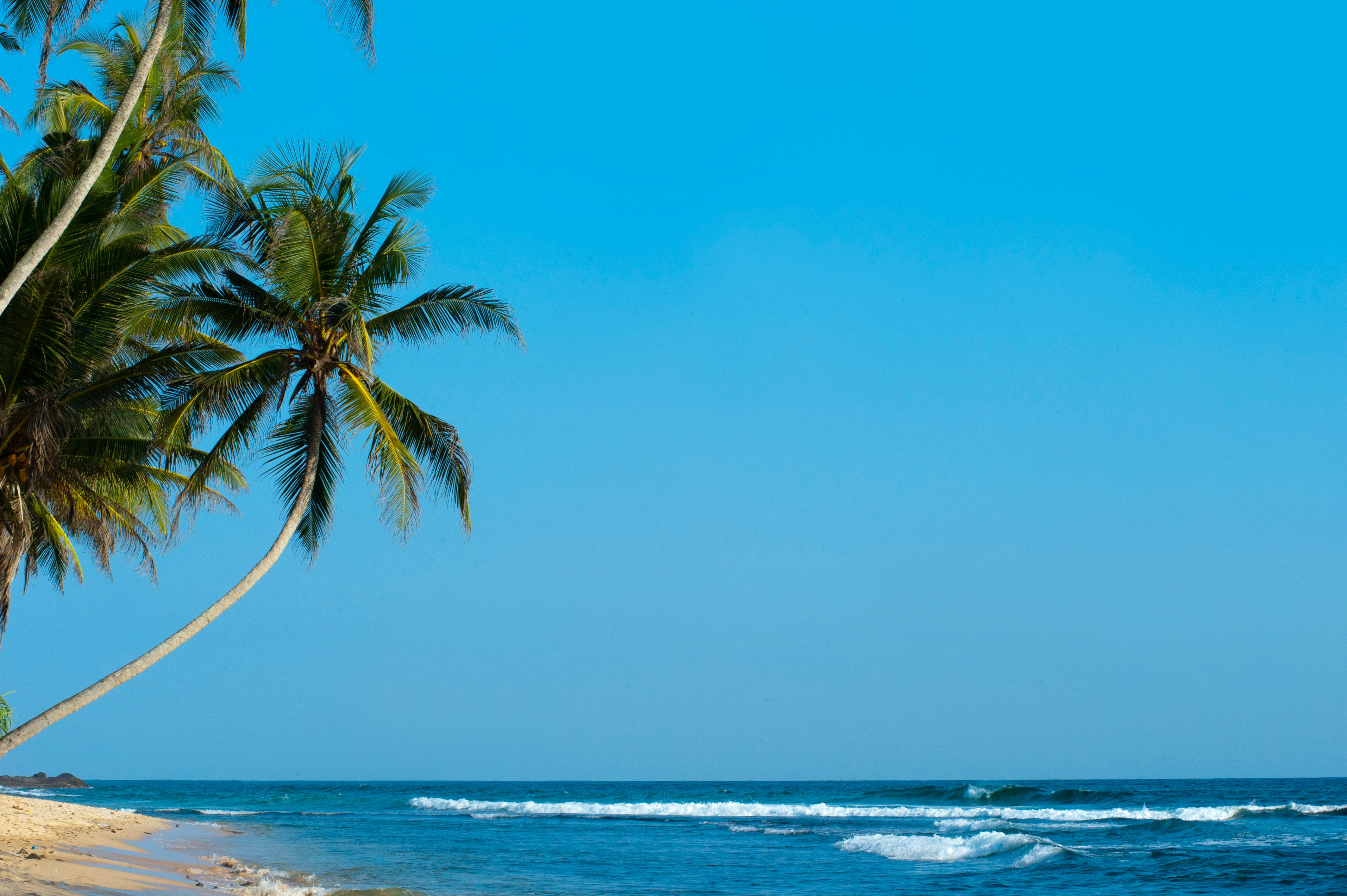 133629 download wallpaper Nature, Palm, Beach, Tropics, Shore, Bank, Surf, Ocean, Sea, Palms screensavers and pictures for free