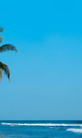 133629壁紙のダウンロード自然, パーム, 手のひら, ビーチ, 熱帯, ショア, 銀行, サーフ, 海洋, 大洋, 海, パームス-スクリーンセーバーと写真を無料で