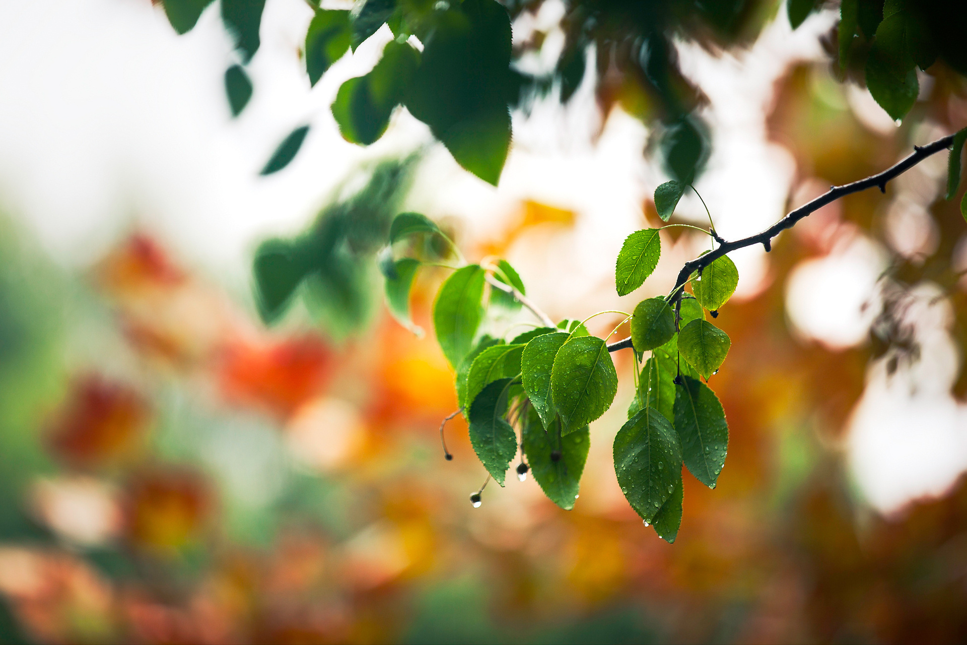 21795 download wallpaper Plants, Trees, Leaves, Drops screensavers and pictures for free