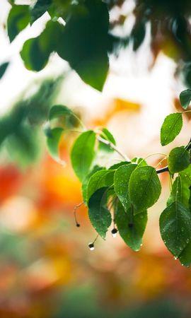 21795 скачать обои Растения, Деревья, Листья, Капли - заставки и картинки бесплатно