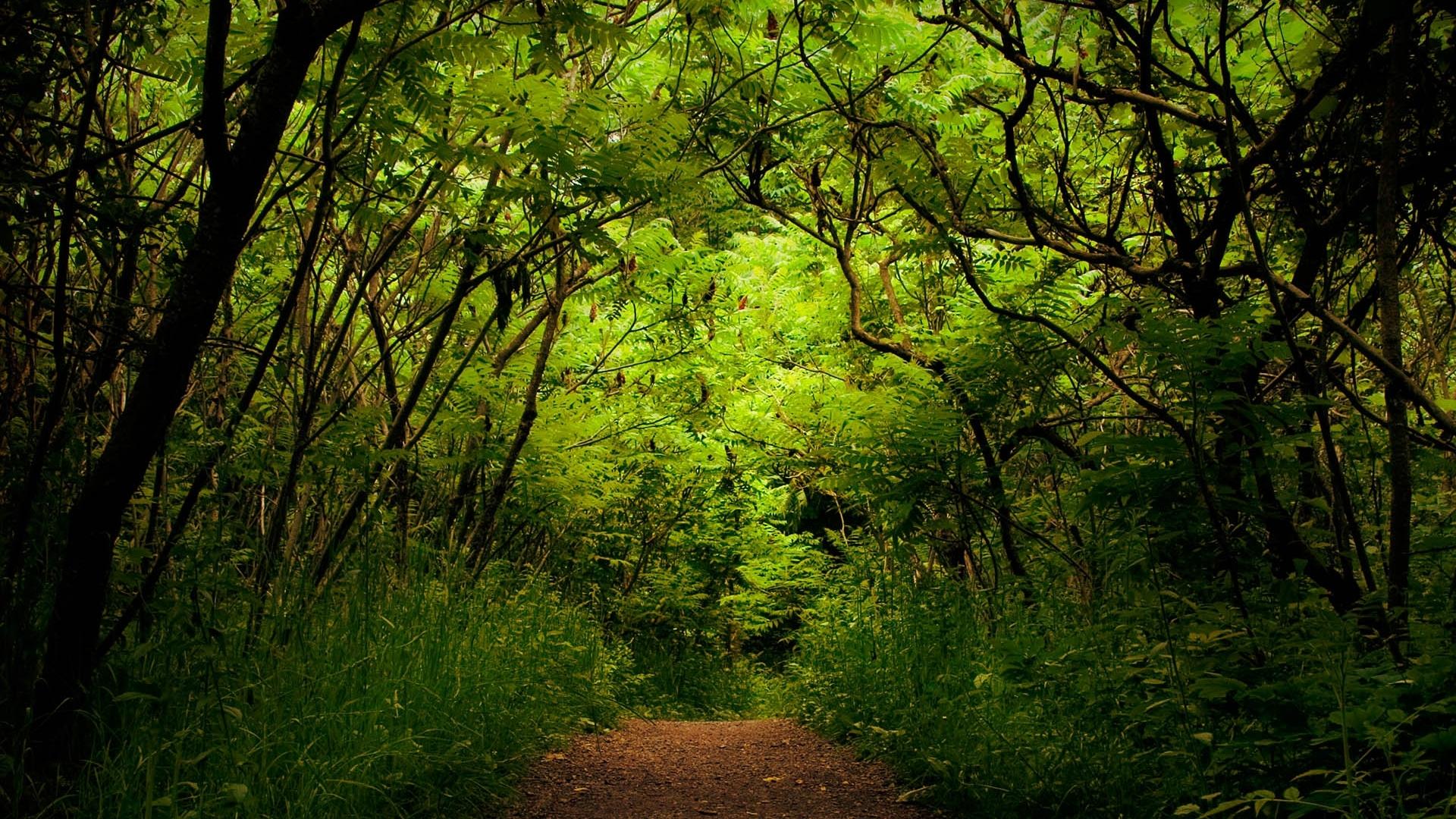 26402 скачать обои Пейзаж, Деревья, Дороги - заставки и картинки бесплатно