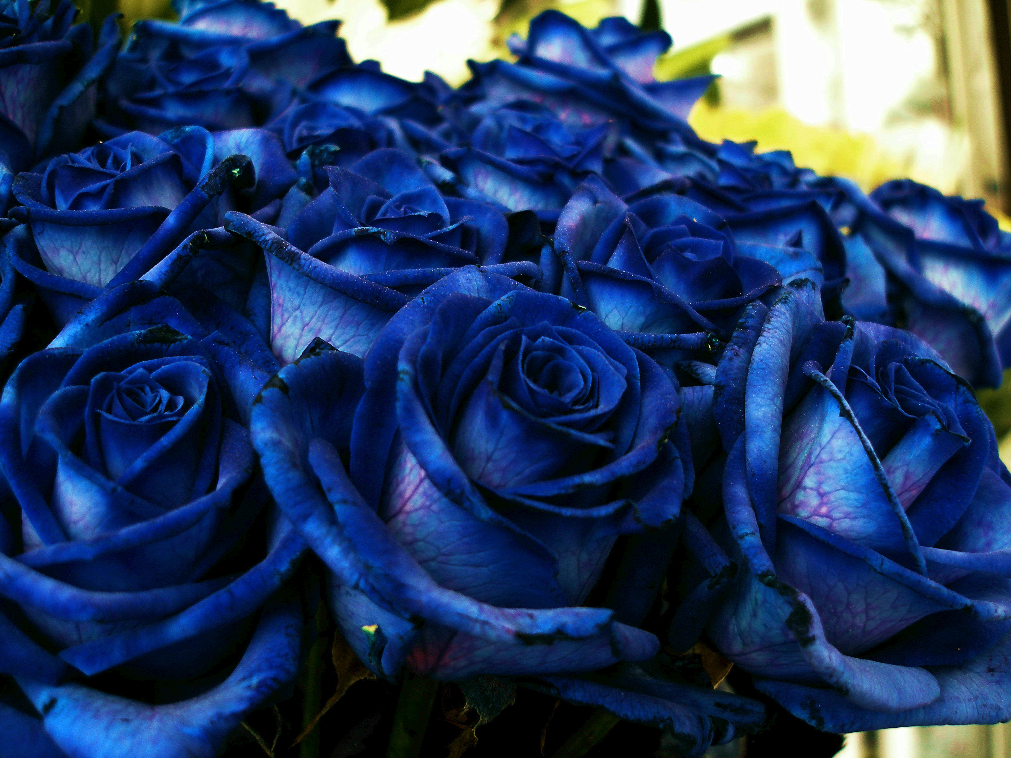90894 Screensavers and Wallpapers Bouquet for phone. Download Flowers, Rose Flower, Rose, Bouquet, Buds pictures for free