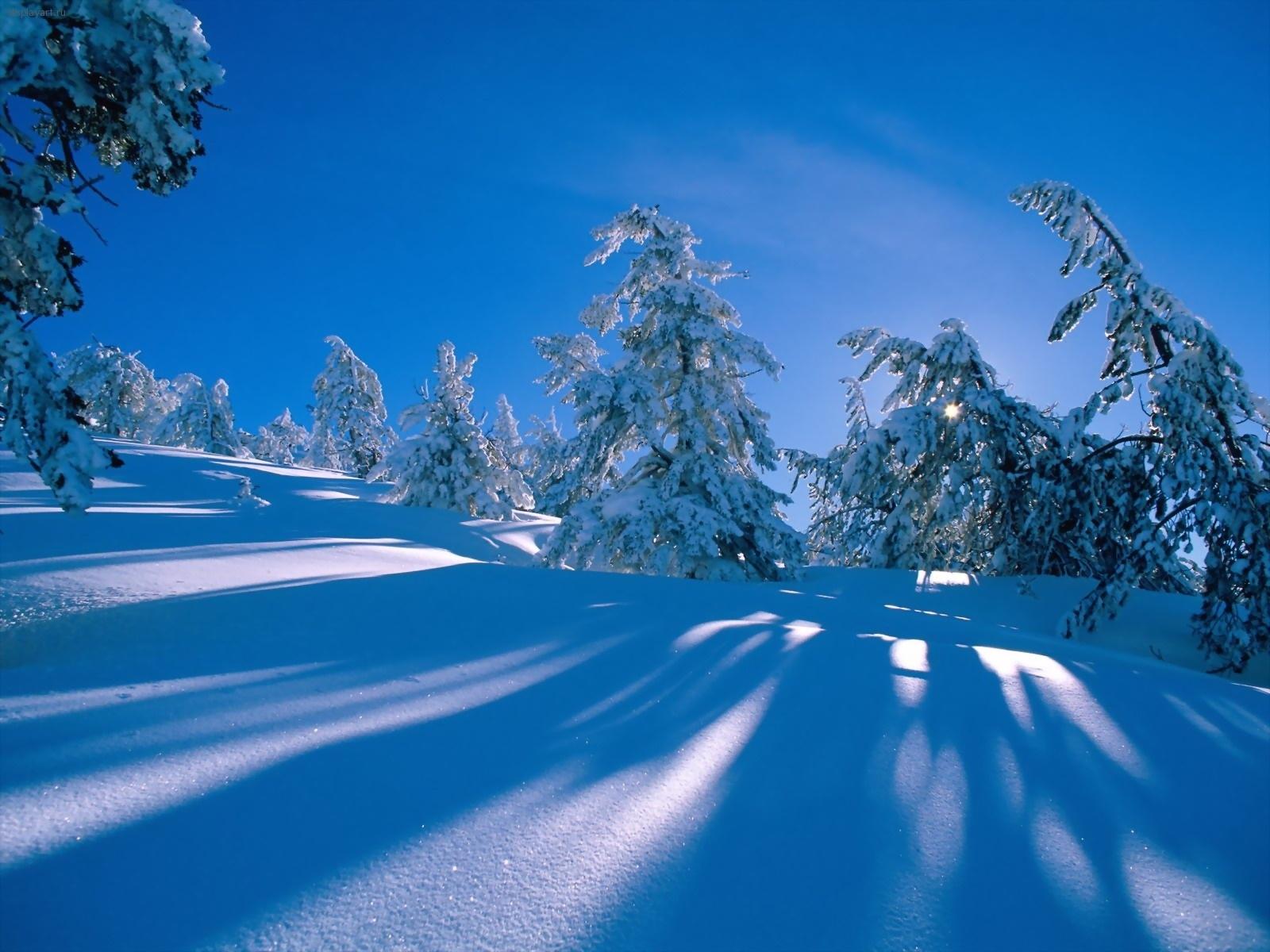 5057 скачать обои Пейзаж, Зима, Деревья, Снег - заставки и картинки бесплатно