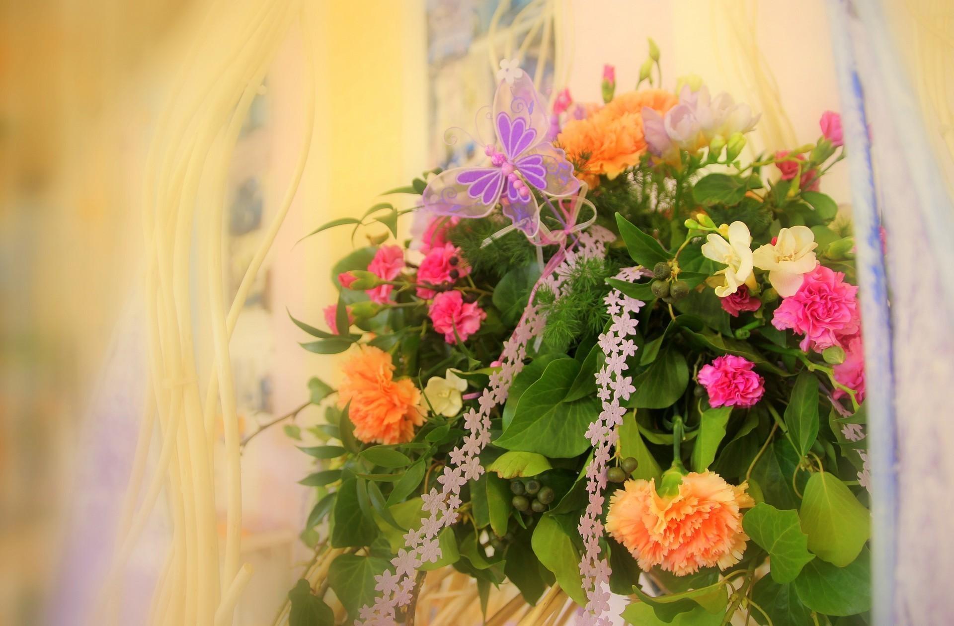 98622 Заставки и Обои Гвоздики на телефон. Скачать Цветы, Гвоздики, Оформление, Бабочка, Нежность картинки бесплатно
