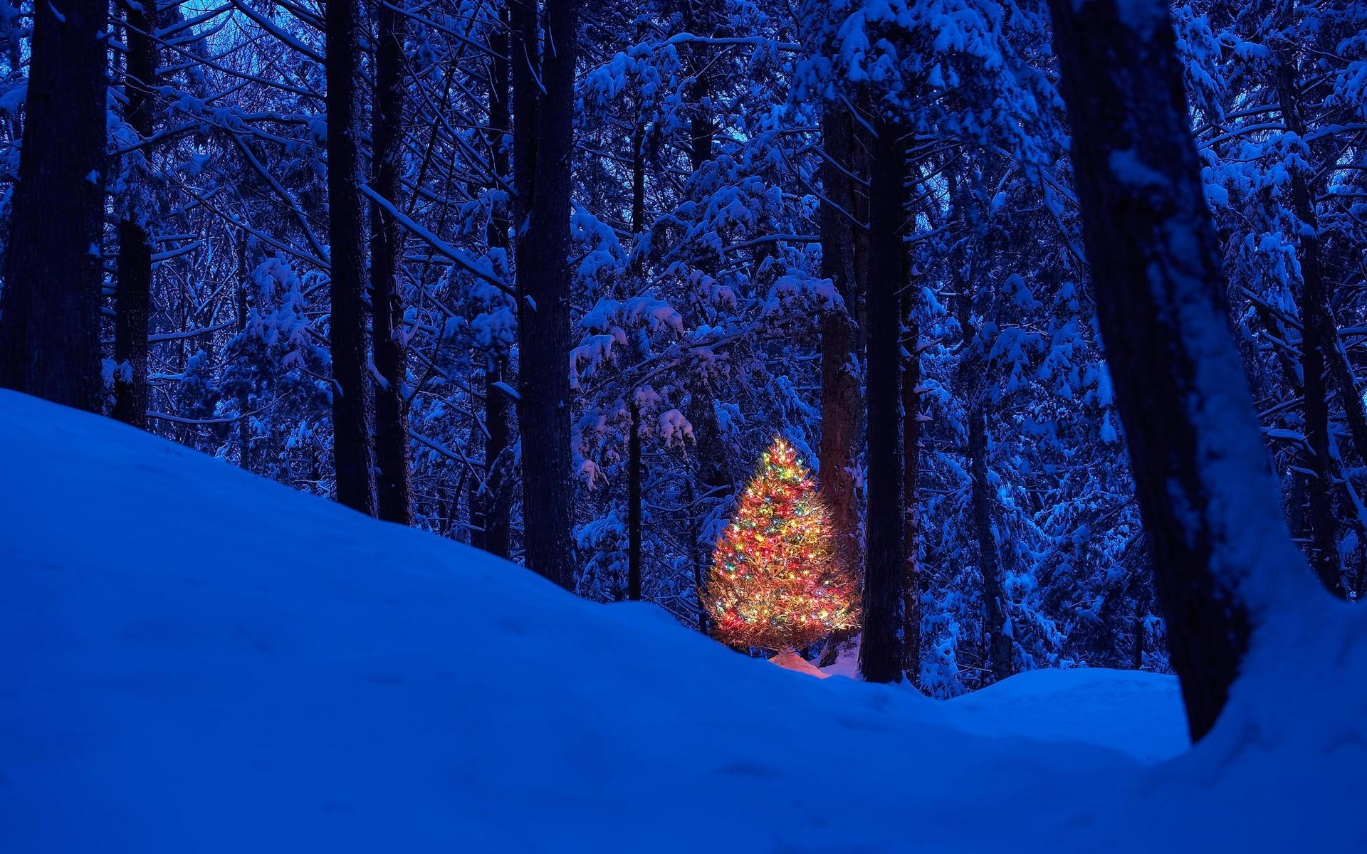 45593 скачать обои Праздники, Пейзаж, Природа, Деревья, Новый Год (New Year), Снег - заставки и картинки бесплатно