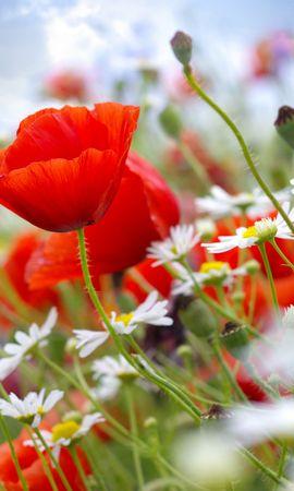 43077 télécharger le fond d'écran Plantes, Fleurs - économiseurs d'écran et images gratuitement