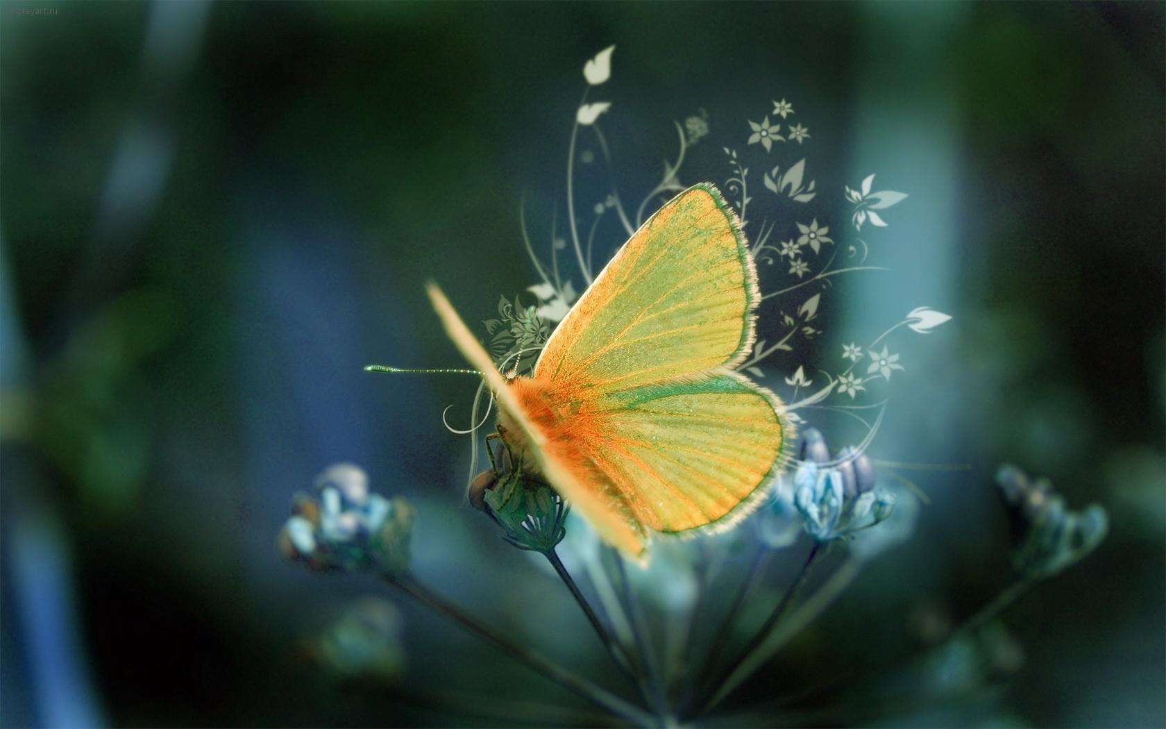 50217 descargar fondo de pantalla Mariposas, Insectos: protectores de pantalla e imágenes gratis