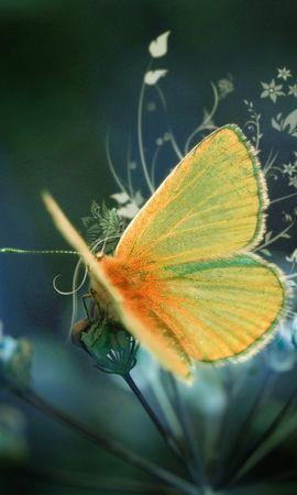 50217 Salvapantallas y fondos de pantalla Insectos en tu teléfono. Descarga imágenes de Mariposas, Insectos gratis