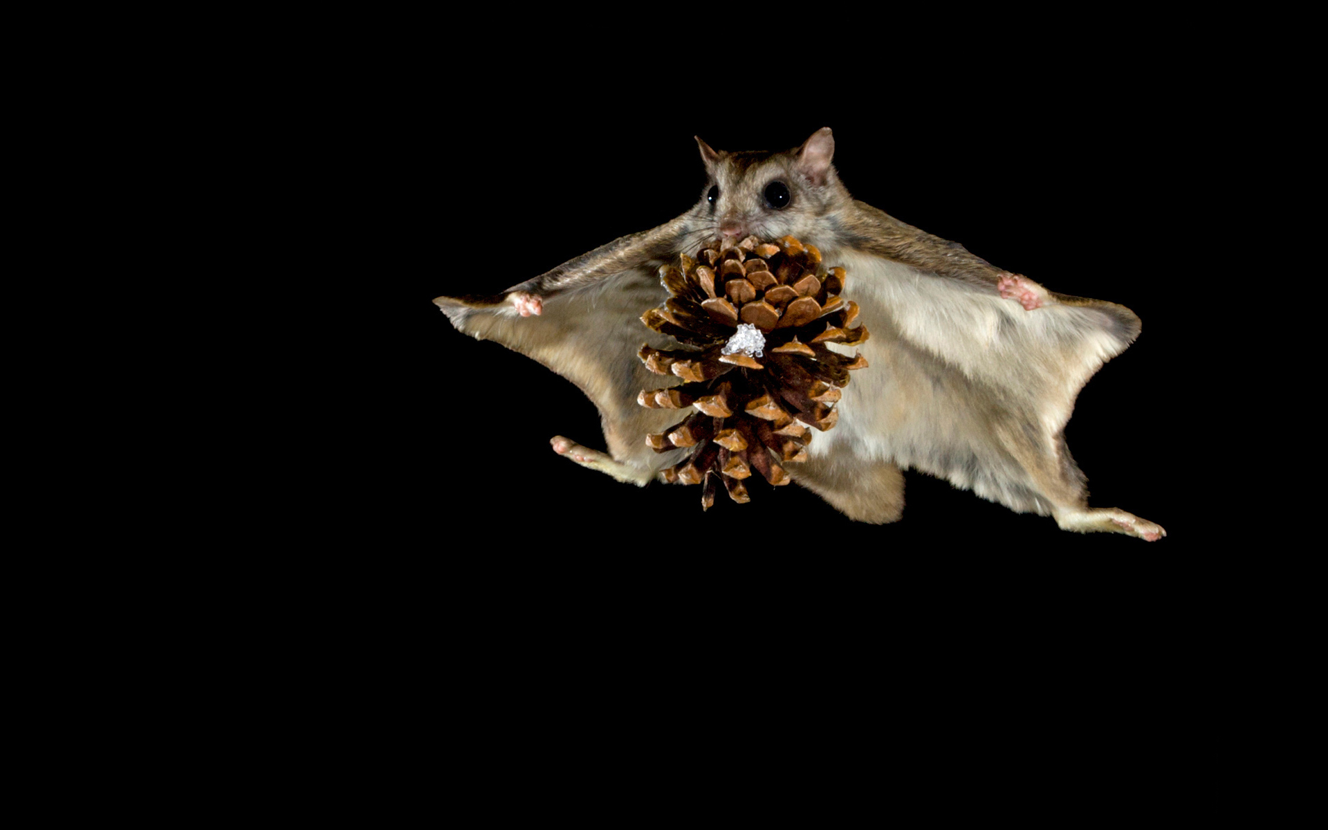 44116 download wallpaper Mice, Cones, Objects screensavers and pictures for free