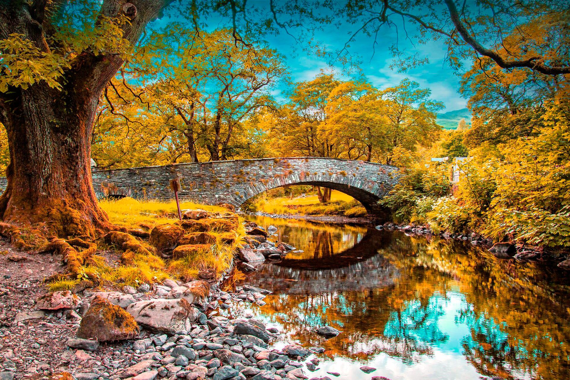 136867 télécharger le fond d'écran Nature, Automne, Rivières, Arbres, Herbe, Étang - économiseurs d'écran et images gratuitement