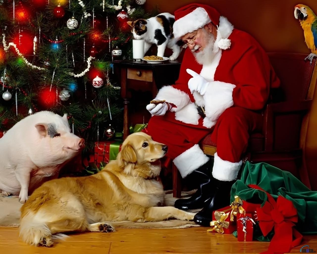2279 download wallpaper Holidays, Animals, Cats, Dogs, New Year, Jack Frost, Santa Claus, Christmas, Xmas, Pigs screensavers and pictures for free