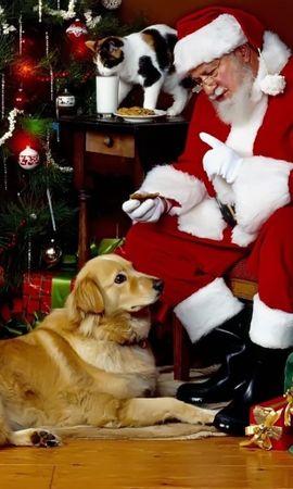 2279 descargar fondo de pantalla Vacaciones, Animales, Gatos, Perros, Año Nuevo, Jack Frost, Papá Noel, Navidad, Pigs: protectores de pantalla e imágenes gratis
