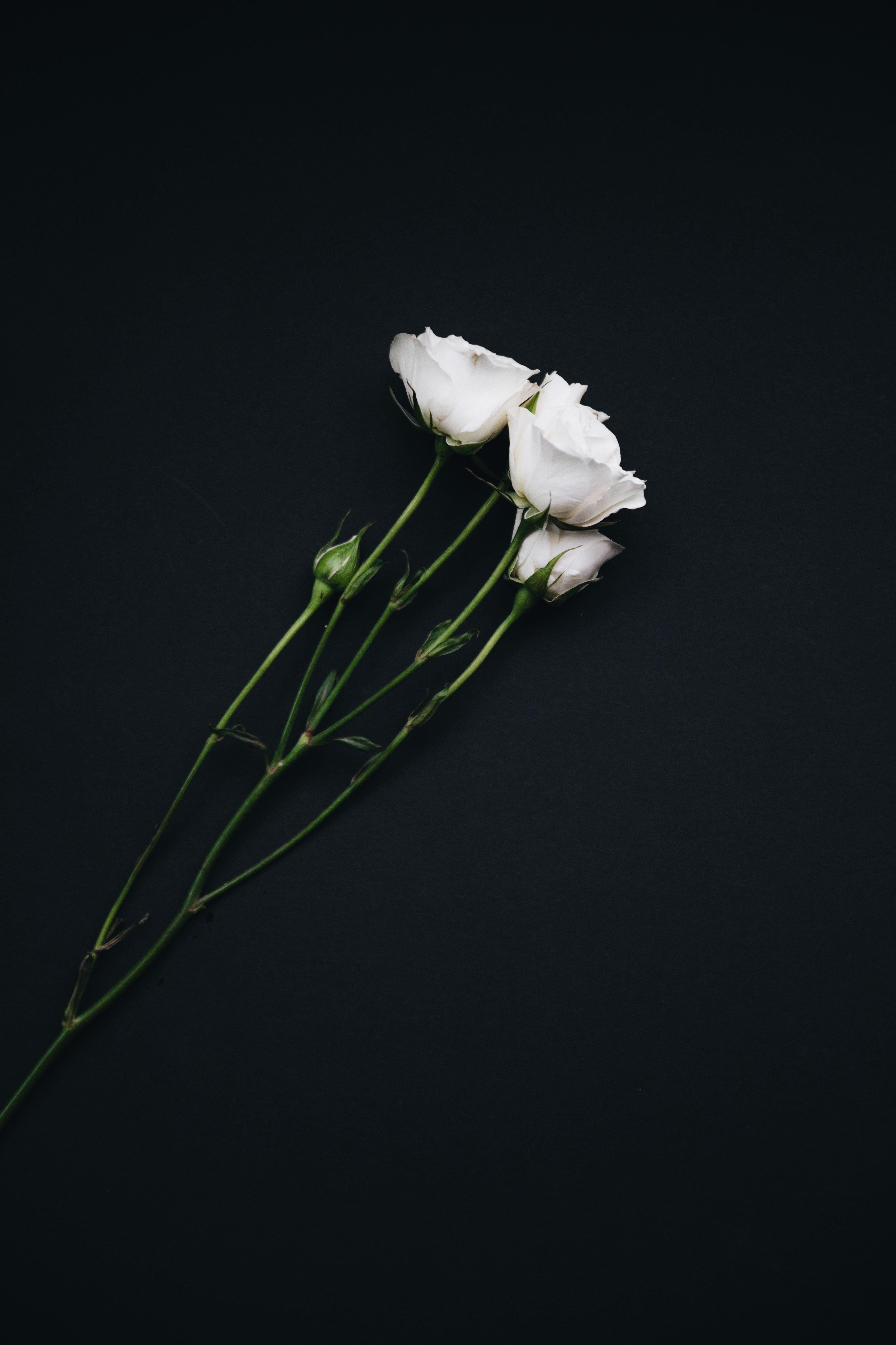 145295 Screensavers and Wallpapers Bouquet for phone. Download Flowers, Roses, Bouquet, Black Background pictures for free