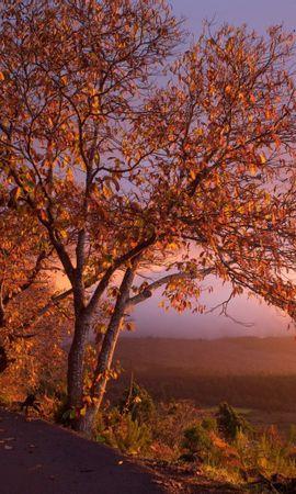 147499 скачать обои Природа, Осень, Деревья, Листва, Закат - заставки и картинки бесплатно