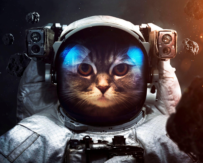 80129 скачать обои Космос, Космонавт, Животные, Кот, Скафандр - заставки и картинки бесплатно