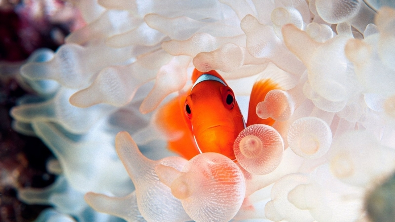 47866 download wallpaper Animals, Fishes screensavers and pictures for free