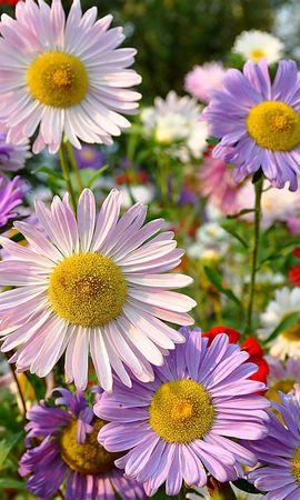 25540 скачать обои Растения, Цветы - заставки и картинки бесплатно