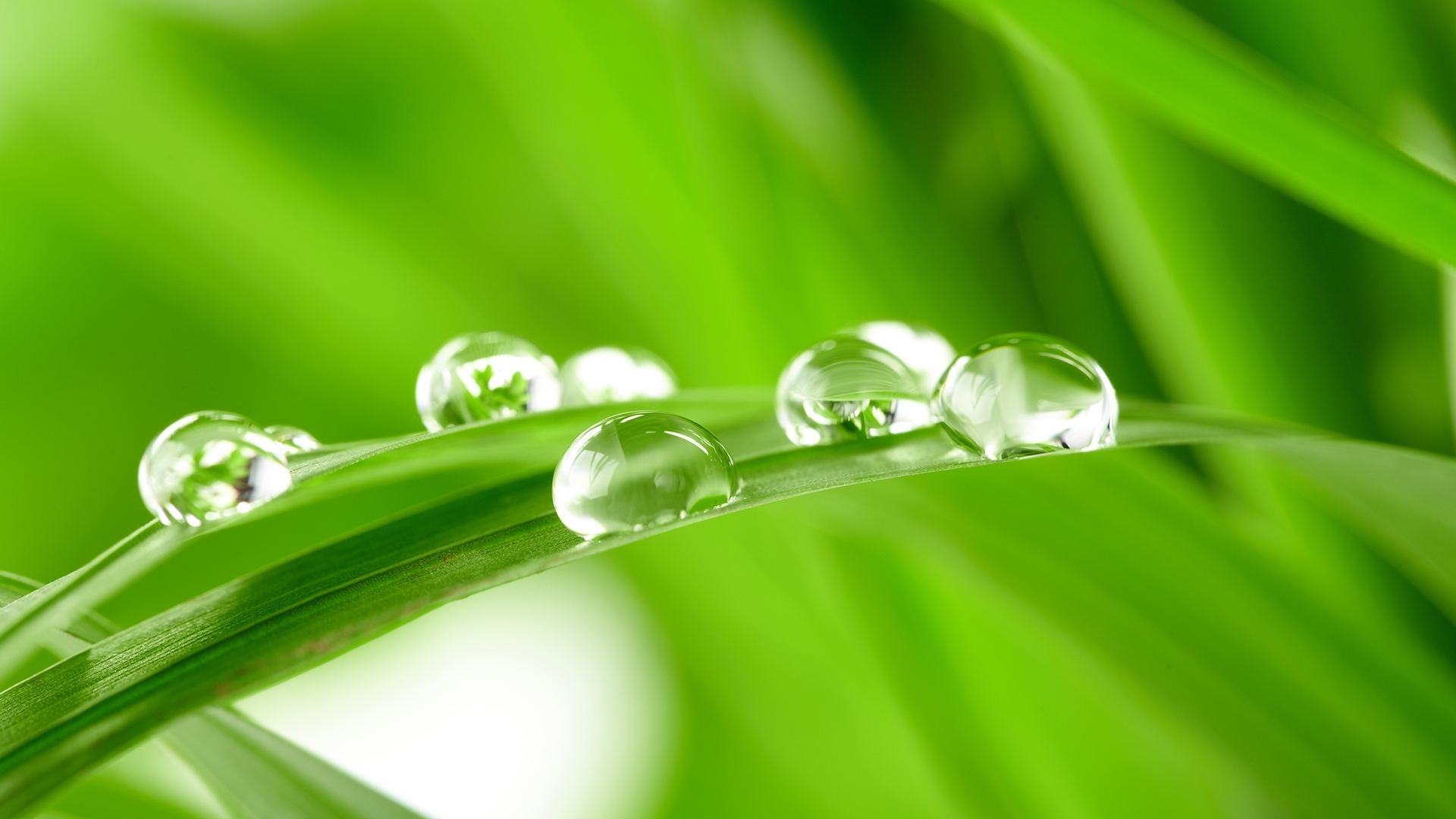 26108 download wallpaper Plants, Grass, Background, Drops screensavers and pictures for free