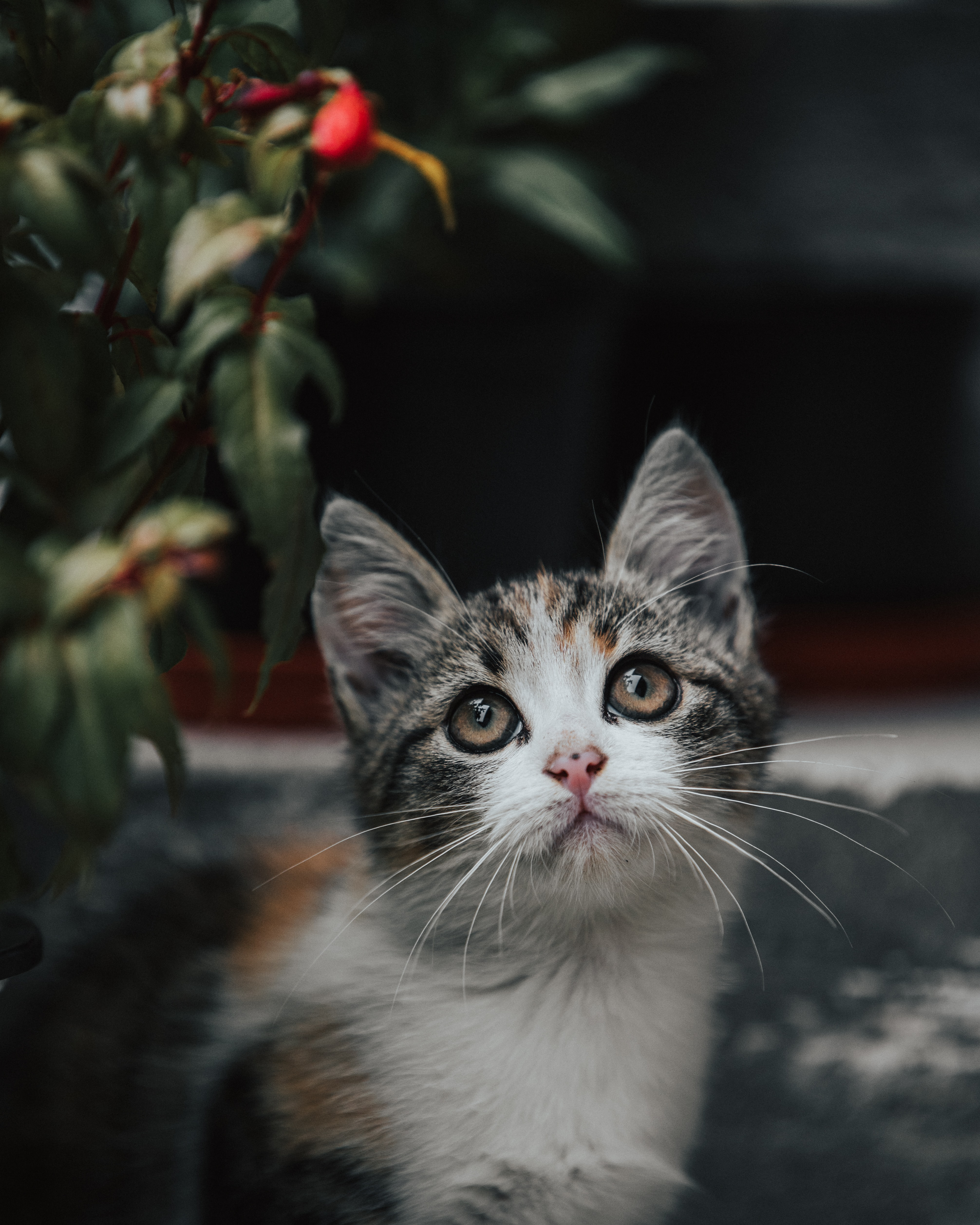 154533 download wallpaper Animals, Kitty, Kitten, Cat, Sight, Opinion, Nice, Sweetheart screensavers and pictures for free