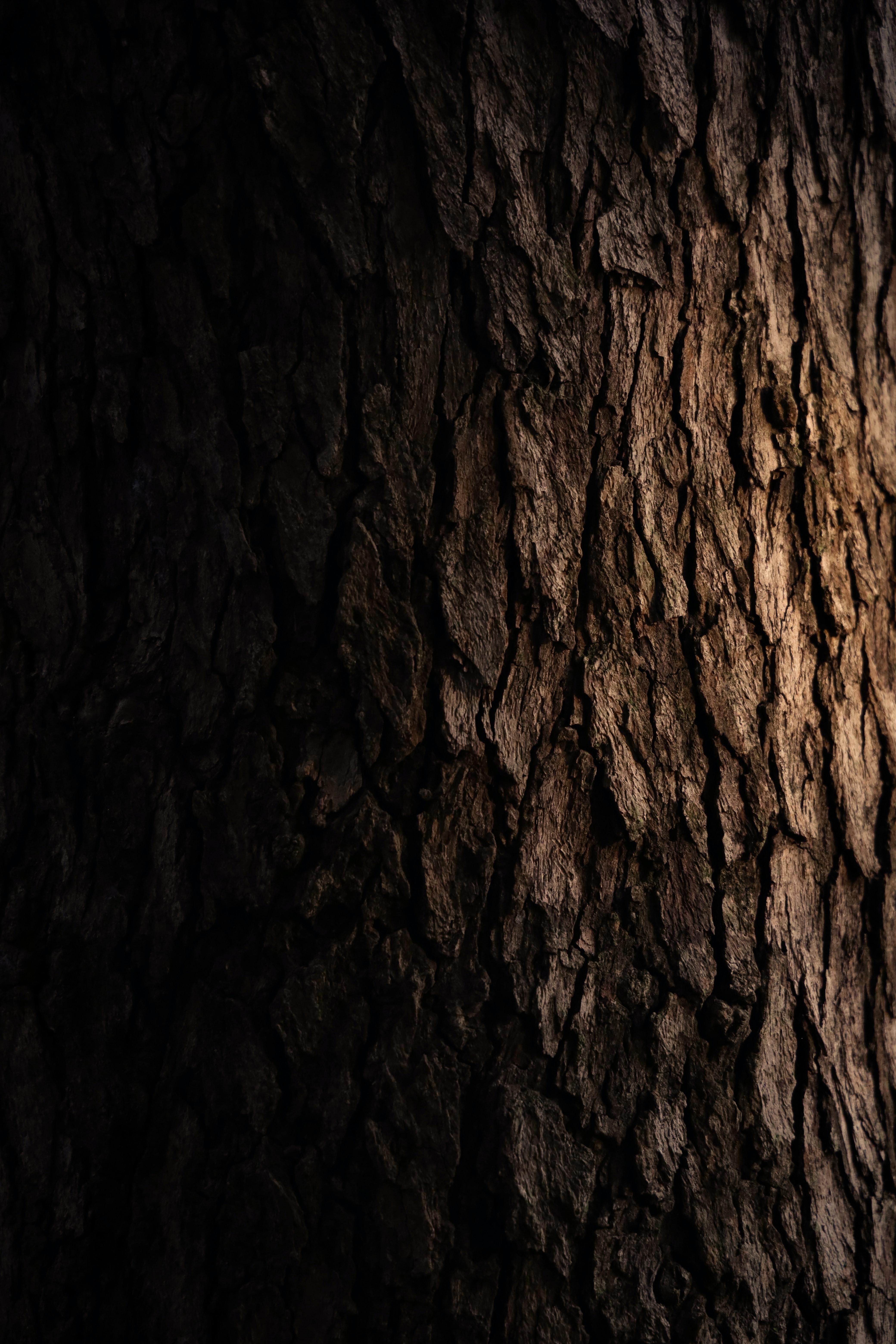 122434 télécharger le fond d'écran Textures, Texture, Aboyer, Écorce, Bois, En Bois, Arbre, Sombre - économiseurs d'écran et images gratuitement