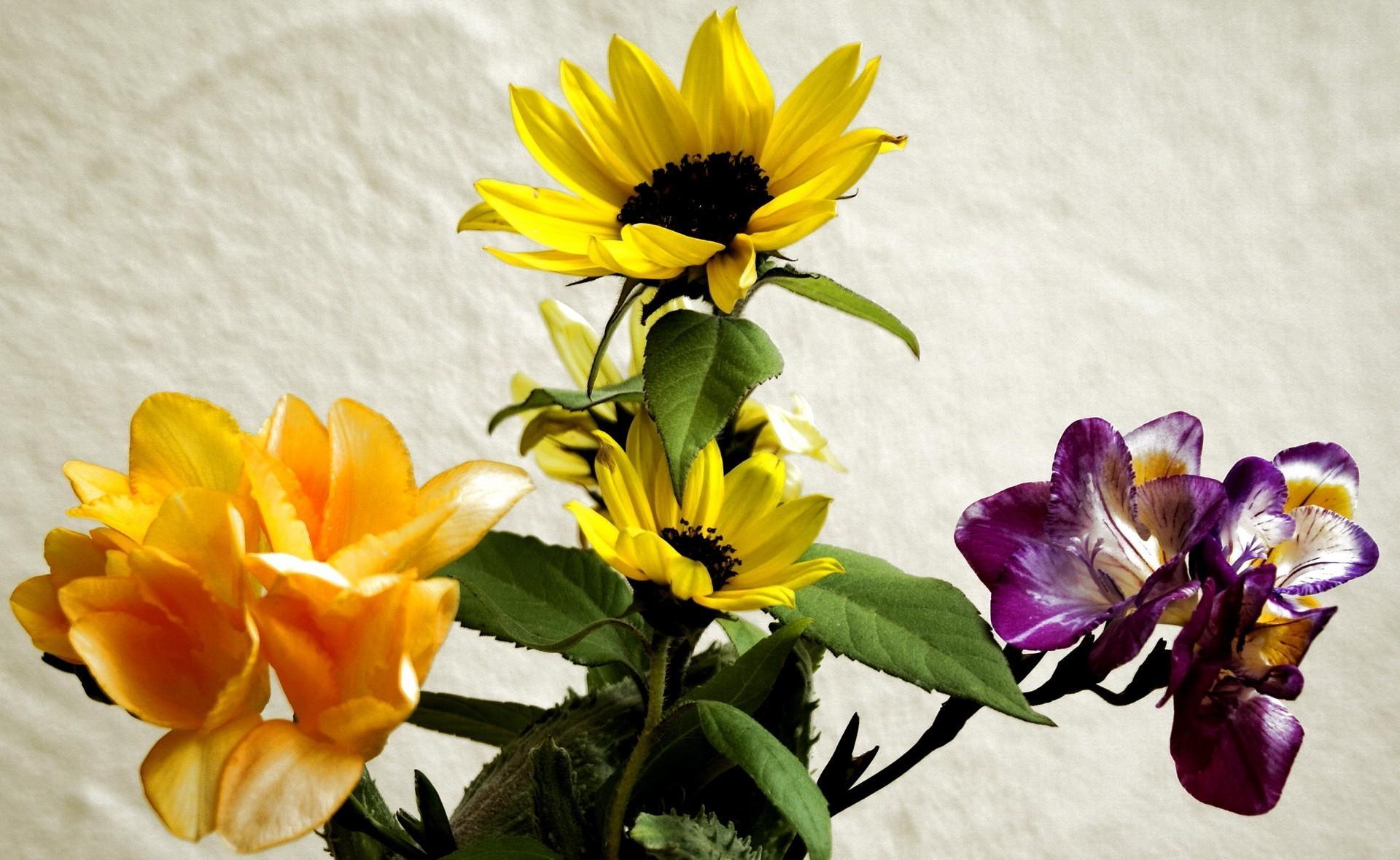 95605 скачать обои Цветы, Ирисы, Букет, Подсолнухи - заставки и картинки бесплатно