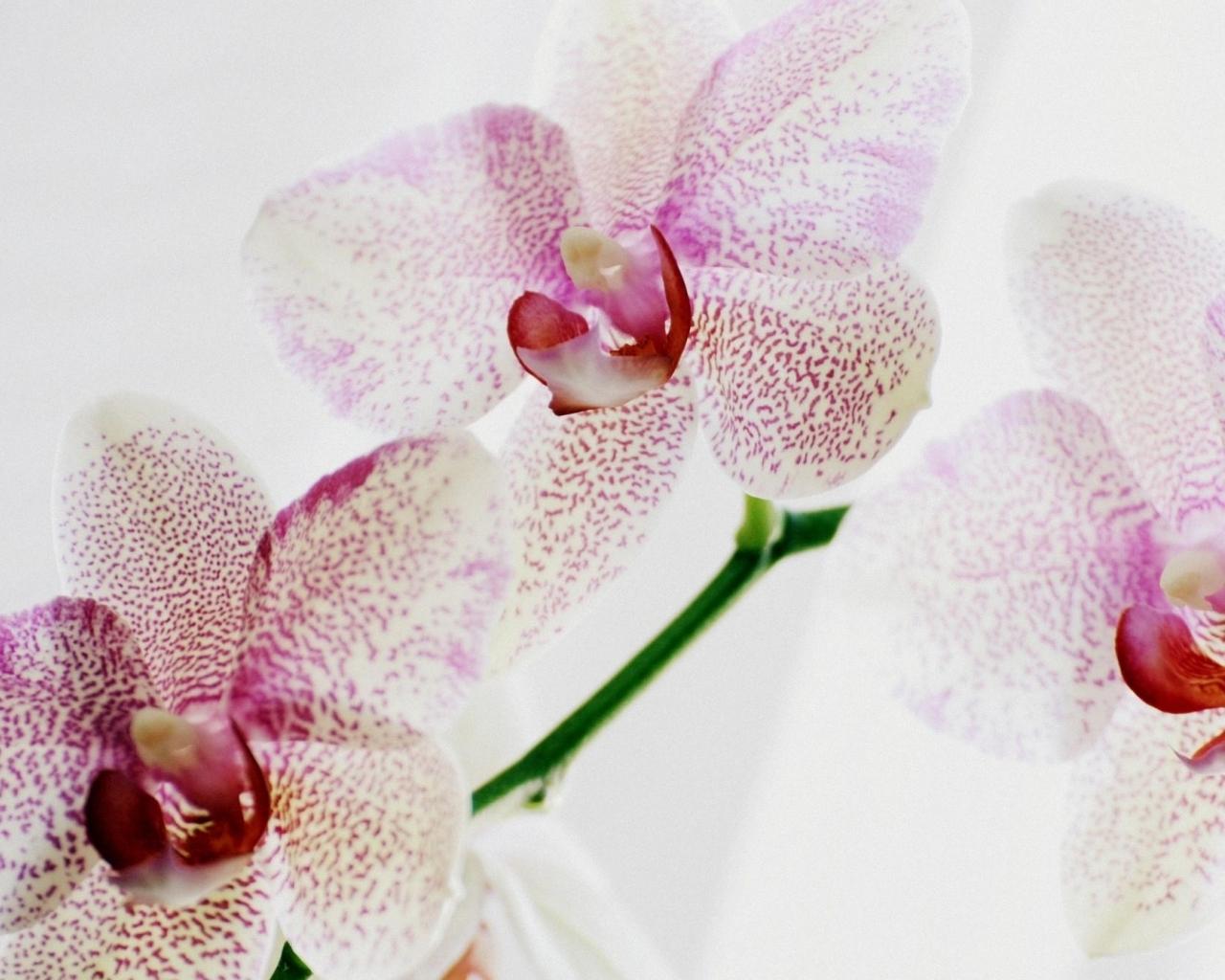 16131 descargar fondo de pantalla Plantas, Flores: protectores de pantalla e imágenes gratis