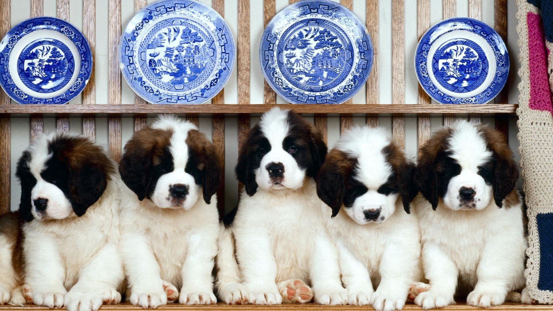 151864 download wallpaper Animals, Puppies, Sit, Dogs screensavers and pictures for free