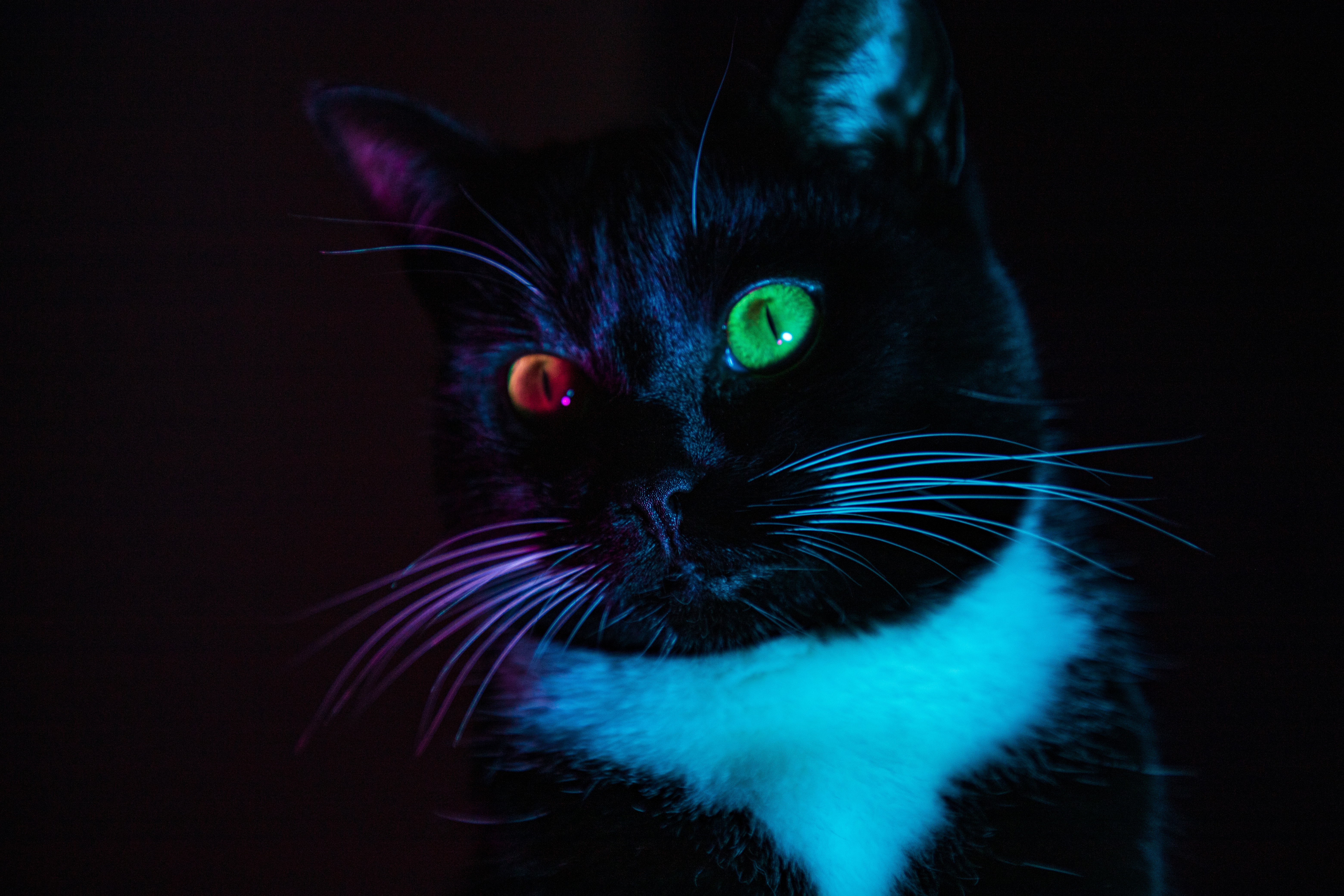 139424 download wallpaper Animals, Cat, Heterochromia, Eyes, Multicolored, Motley, Sight, Opinion screensavers and pictures for free