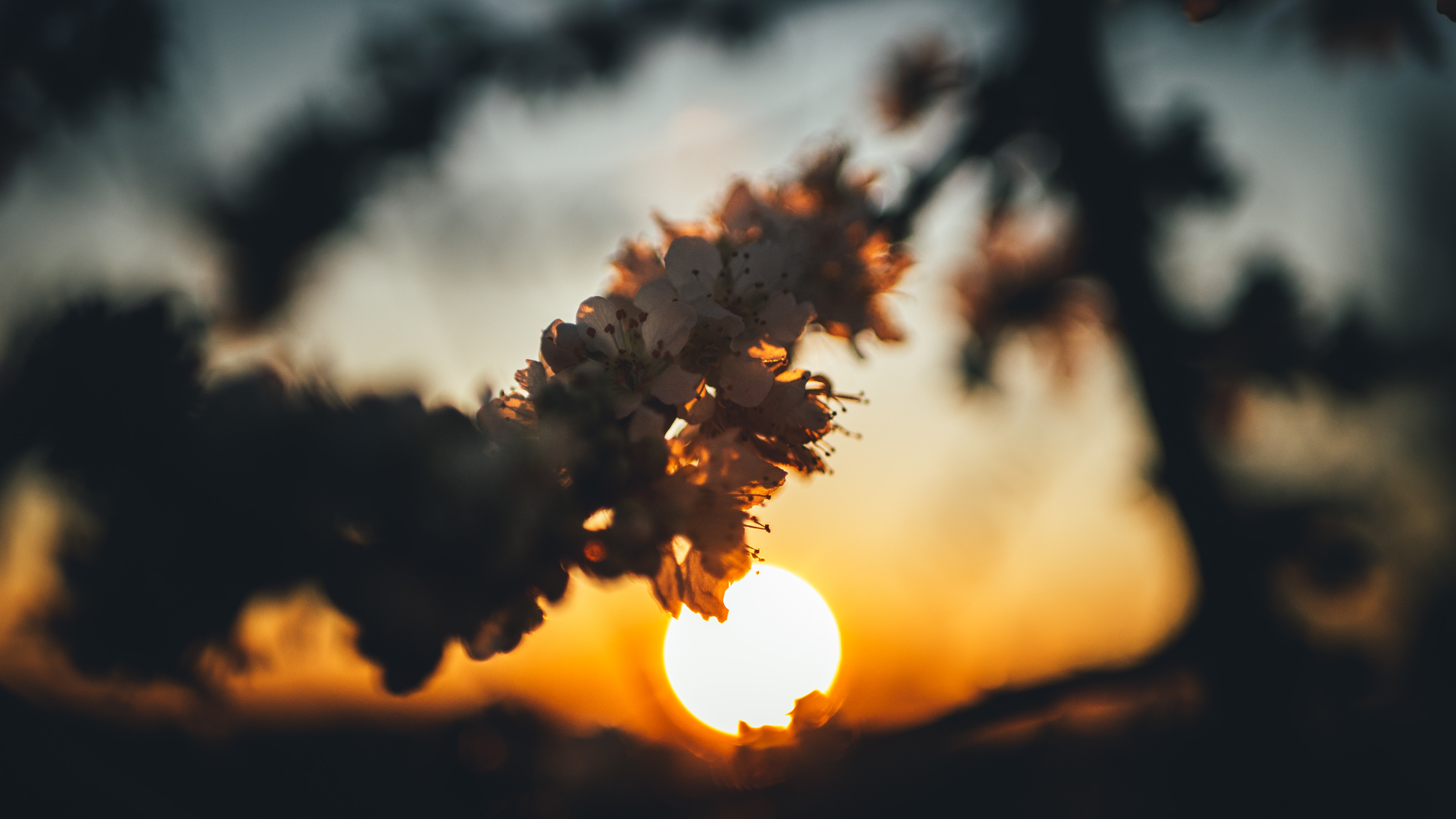 119949 Заставки и Обои Вишня на телефон. Скачать Цветы, Закат, Вишня, Солнце, Ветка картинки бесплатно