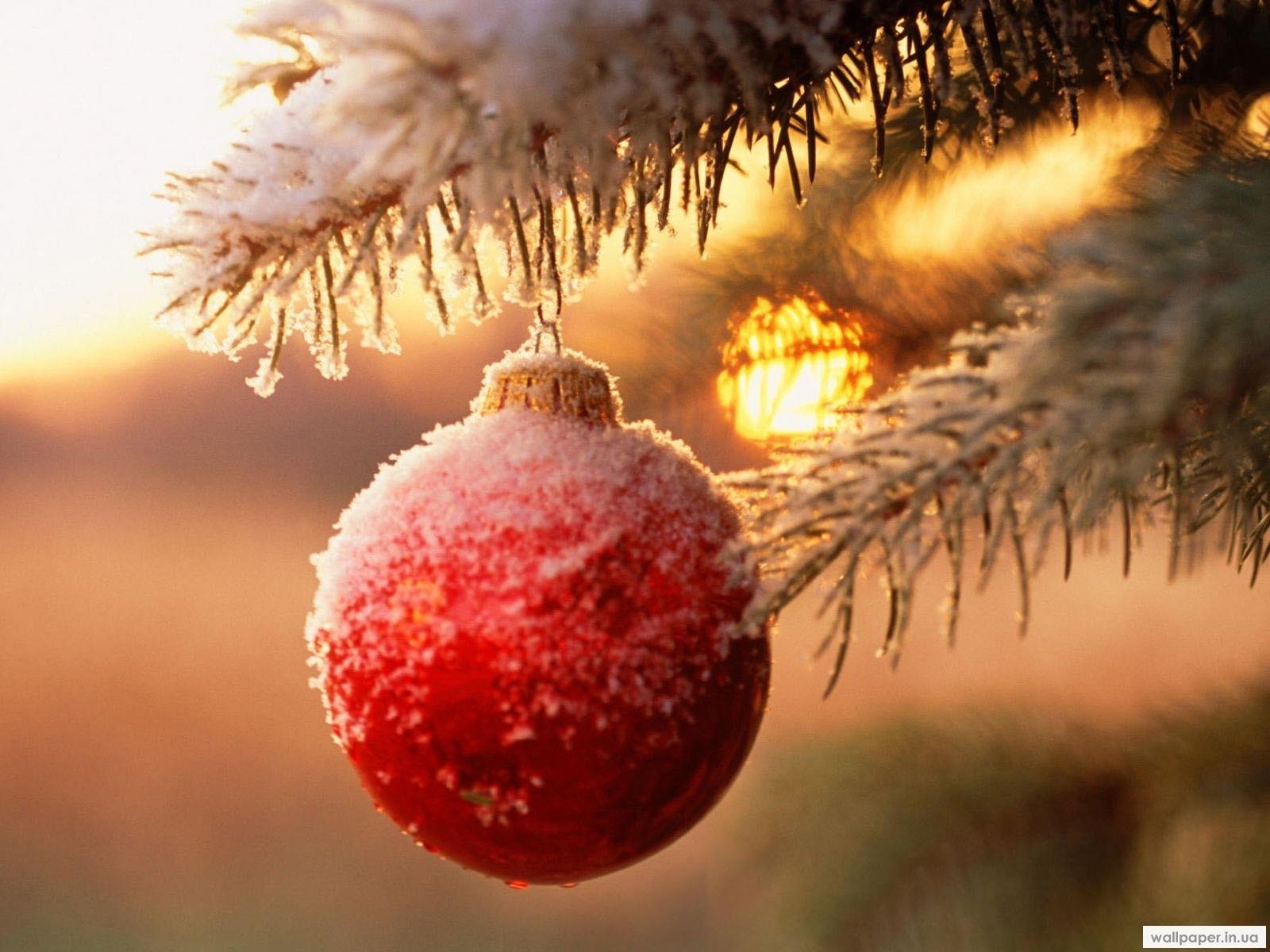 2226 скачать обои Праздники, Новый Год (New Year), Игрушки, Снег, Рождество (Christmas, Xmas) - заставки и картинки бесплатно