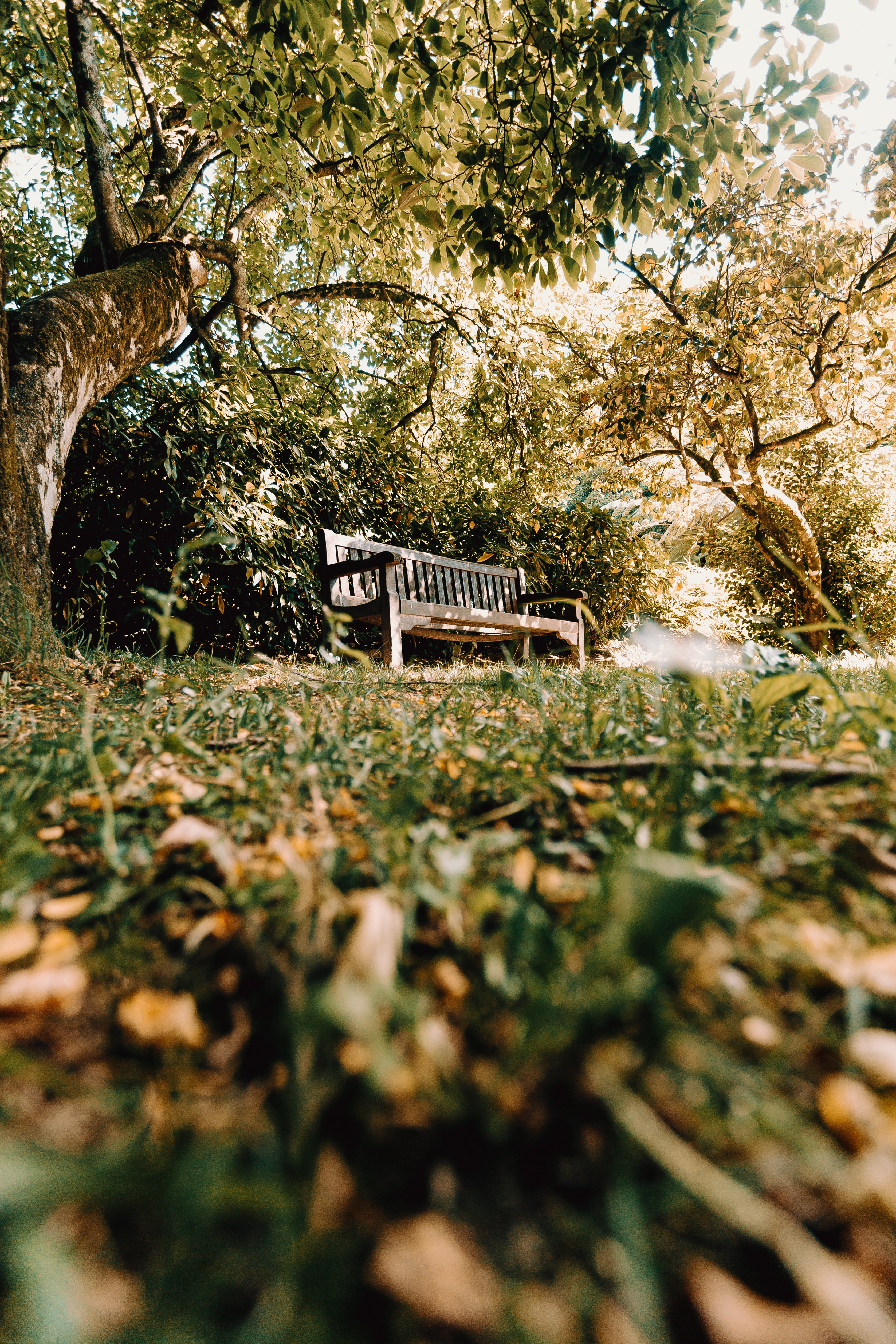 155825 Screensavers and Wallpapers Bench for phone. Download Nature, Trees, Miscellanea, Miscellaneous, Bench, Shop, Store pictures for free