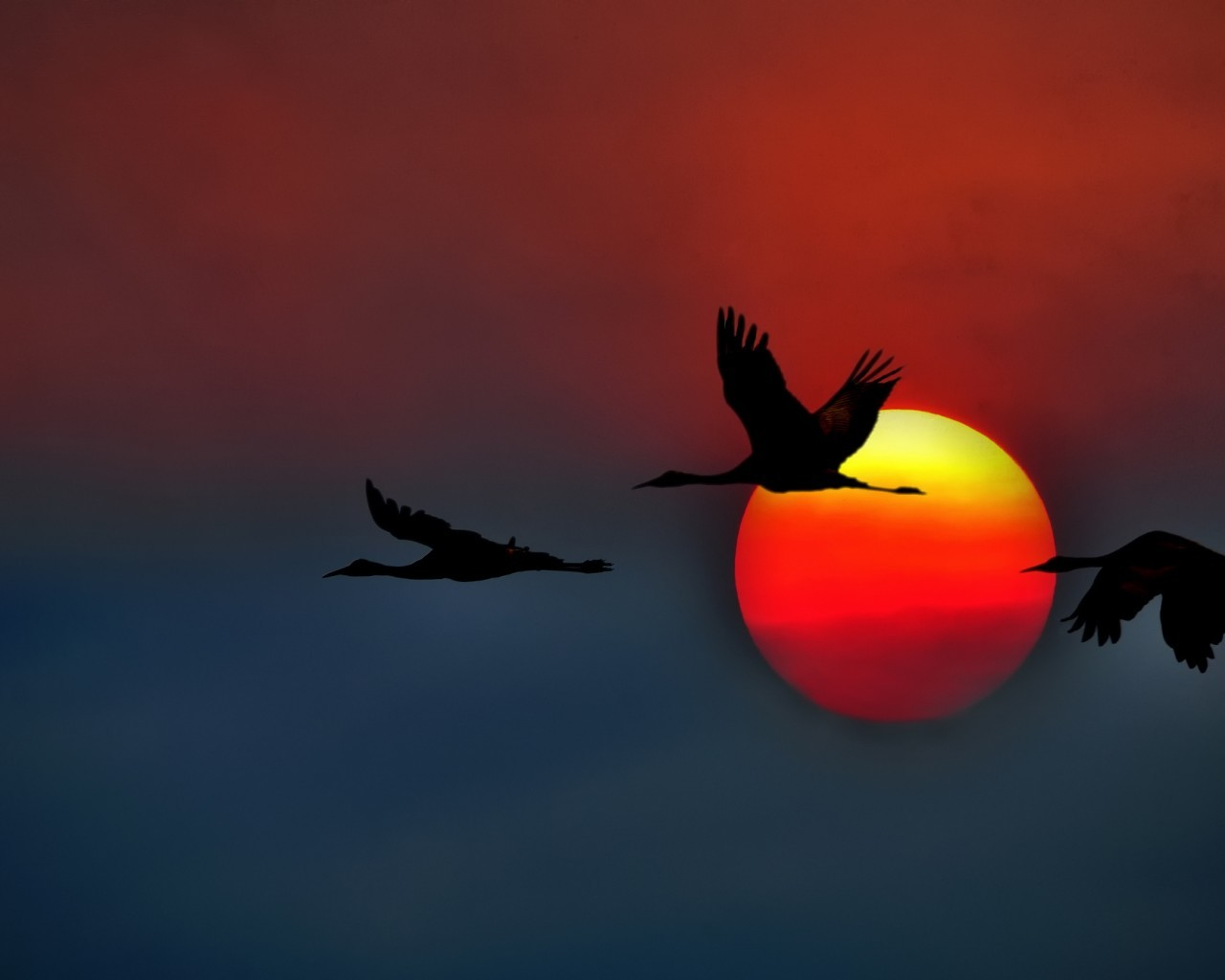 21604 download wallpaper Animals, Birds, Sunset, Pictures, Cranes screensavers and pictures for free