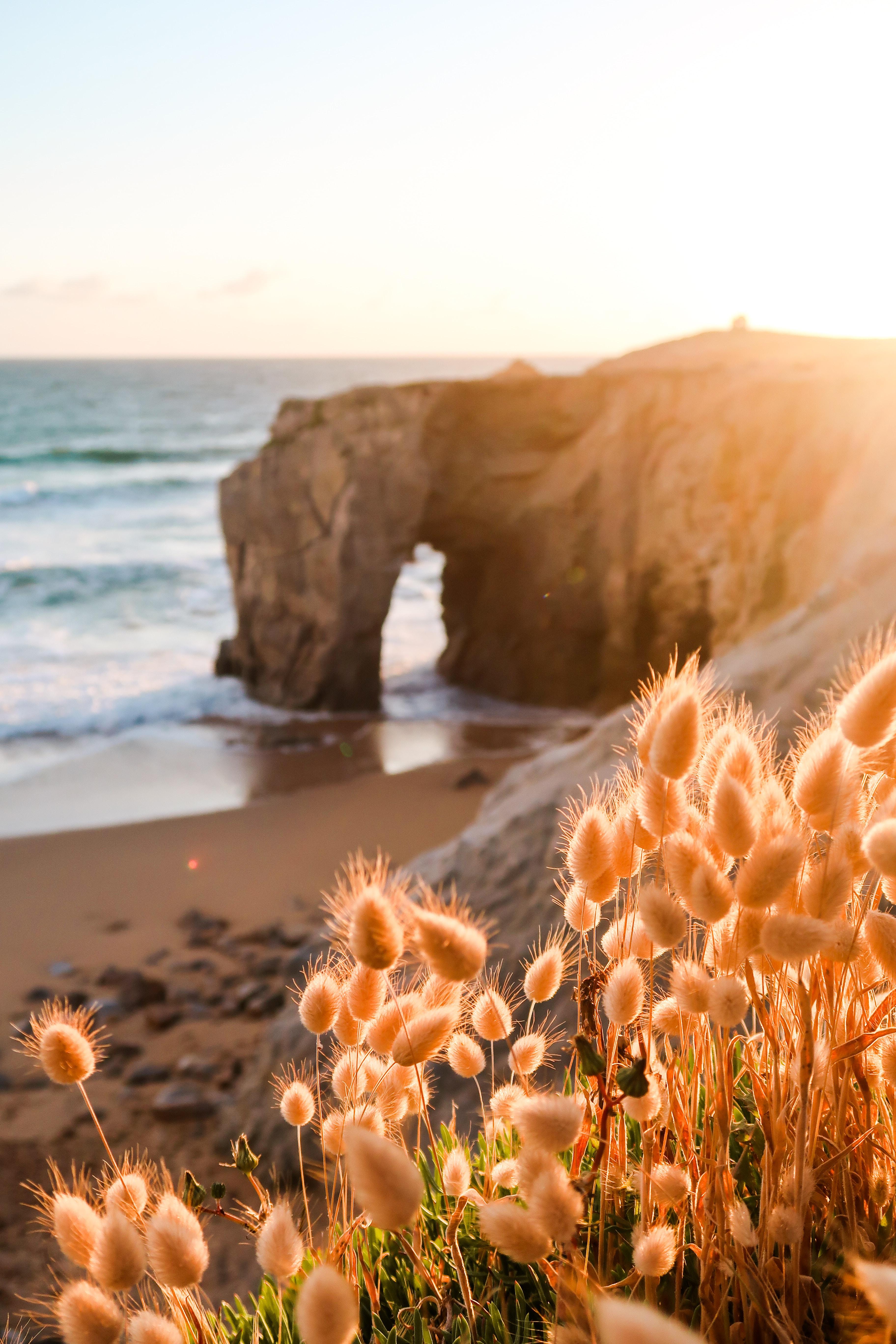 102505 скачать обои Побережье, Пляж, Растения, Скала, Природа - заставки и картинки бесплатно