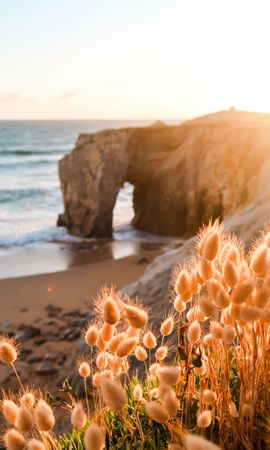 102505 download wallpaper Coast, Beach, Plants, Rock, Nature screensavers and pictures for free