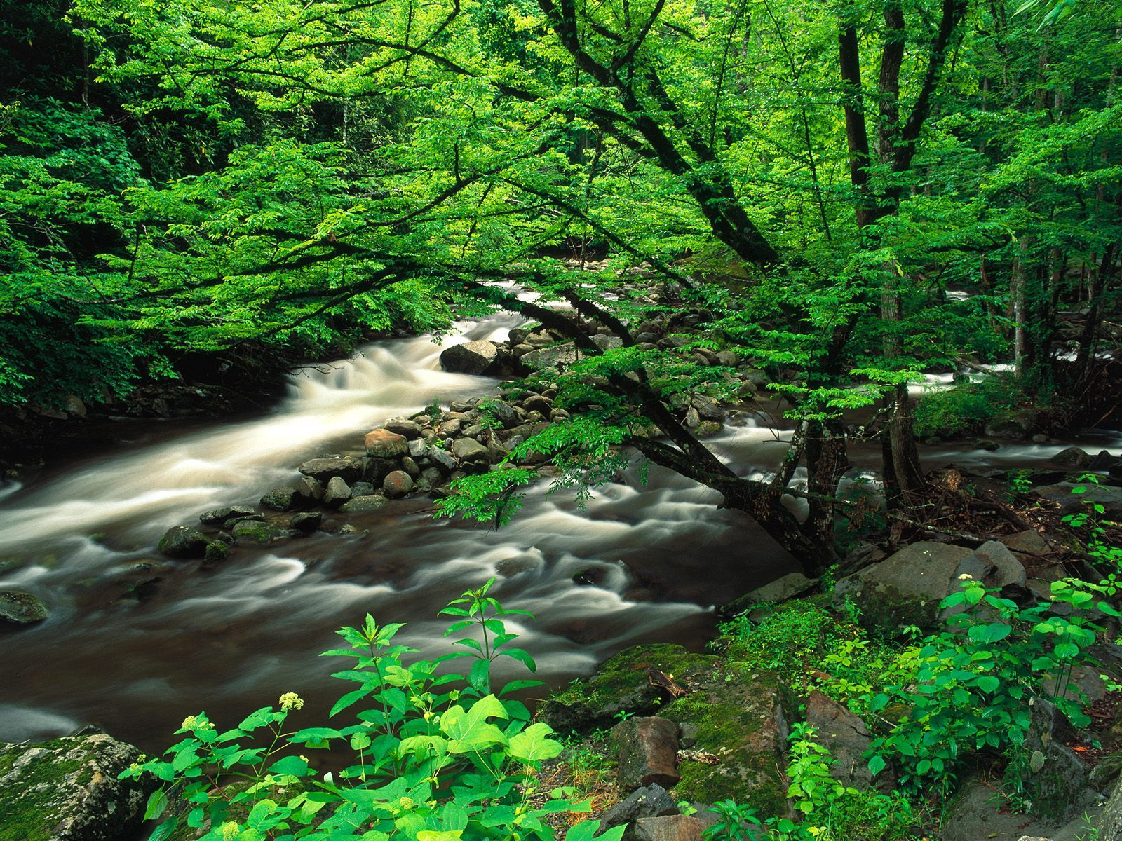 12133 скачать обои Пейзаж, Река, Деревья - заставки и картинки бесплатно