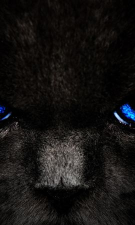 155769 Screensavers and Wallpapers Dark for phone. Download Cat, Eyes, Sight, Opinion, Dark pictures for free