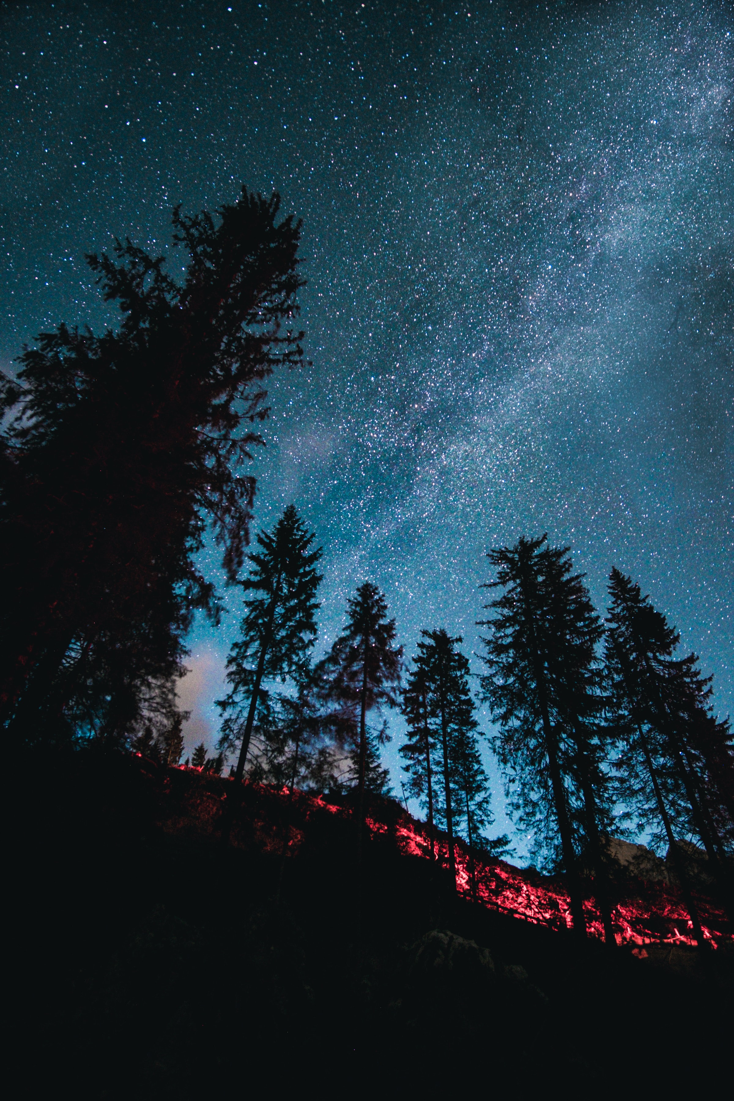 118488 Screensavers and Wallpapers Stars for phone. Download Stars, Nature, Trees, Forest, Starry Sky, Spruce, Fir pictures for free