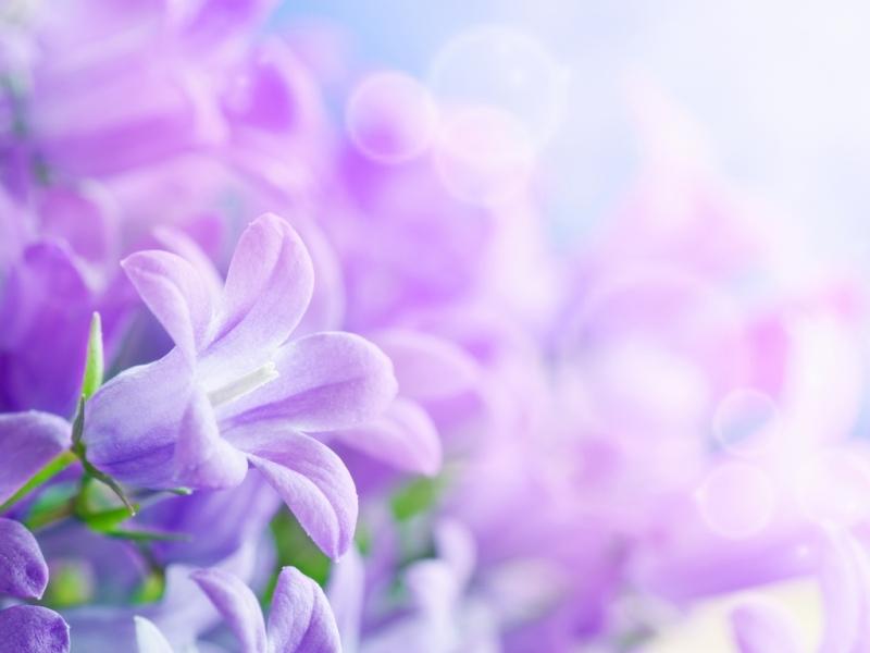 42095 Hintergrundbild herunterladen Blumen, Hintergrund, Pflanzen - Bildschirmschoner und Bilder kostenlos
