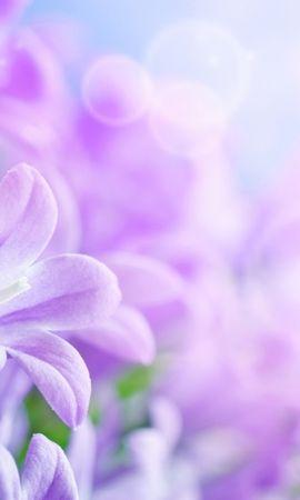 42095 скачать обои Растения, Цветы, Фон - заставки и картинки бесплатно