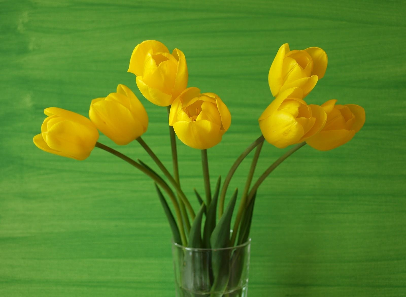 103240 descargar fondo de pantalla Flores, Fondo, Jarrón, Tulipanes: protectores de pantalla e imágenes gratis
