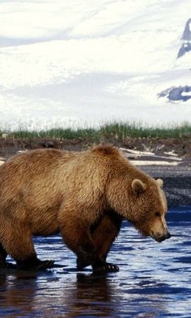 24943 скачать обои Животные, Медведи - заставки и картинки бесплатно