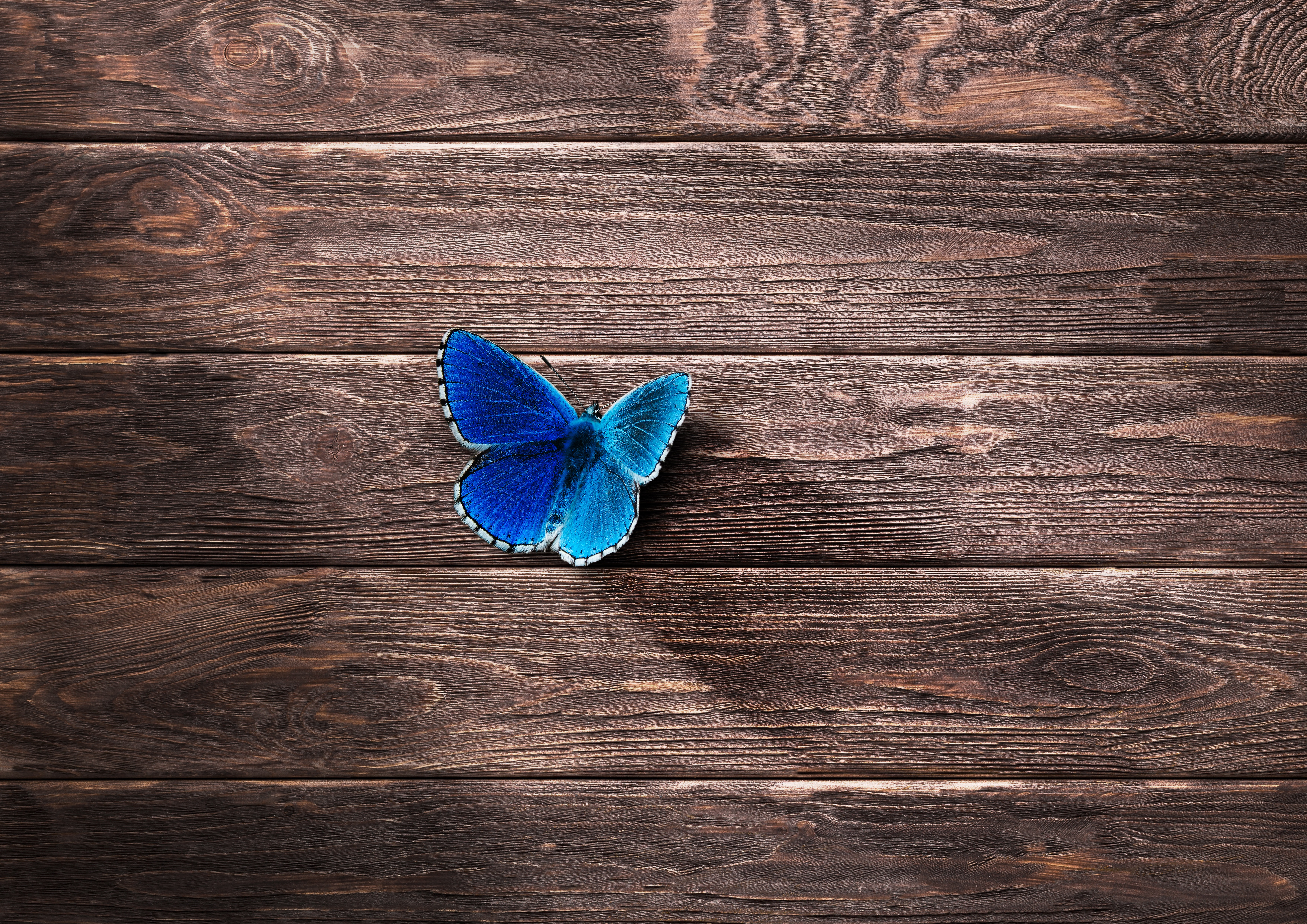 82208 download wallpaper Surface, Wood, Wooden, Minimalism, Butterfly screensavers and pictures for free