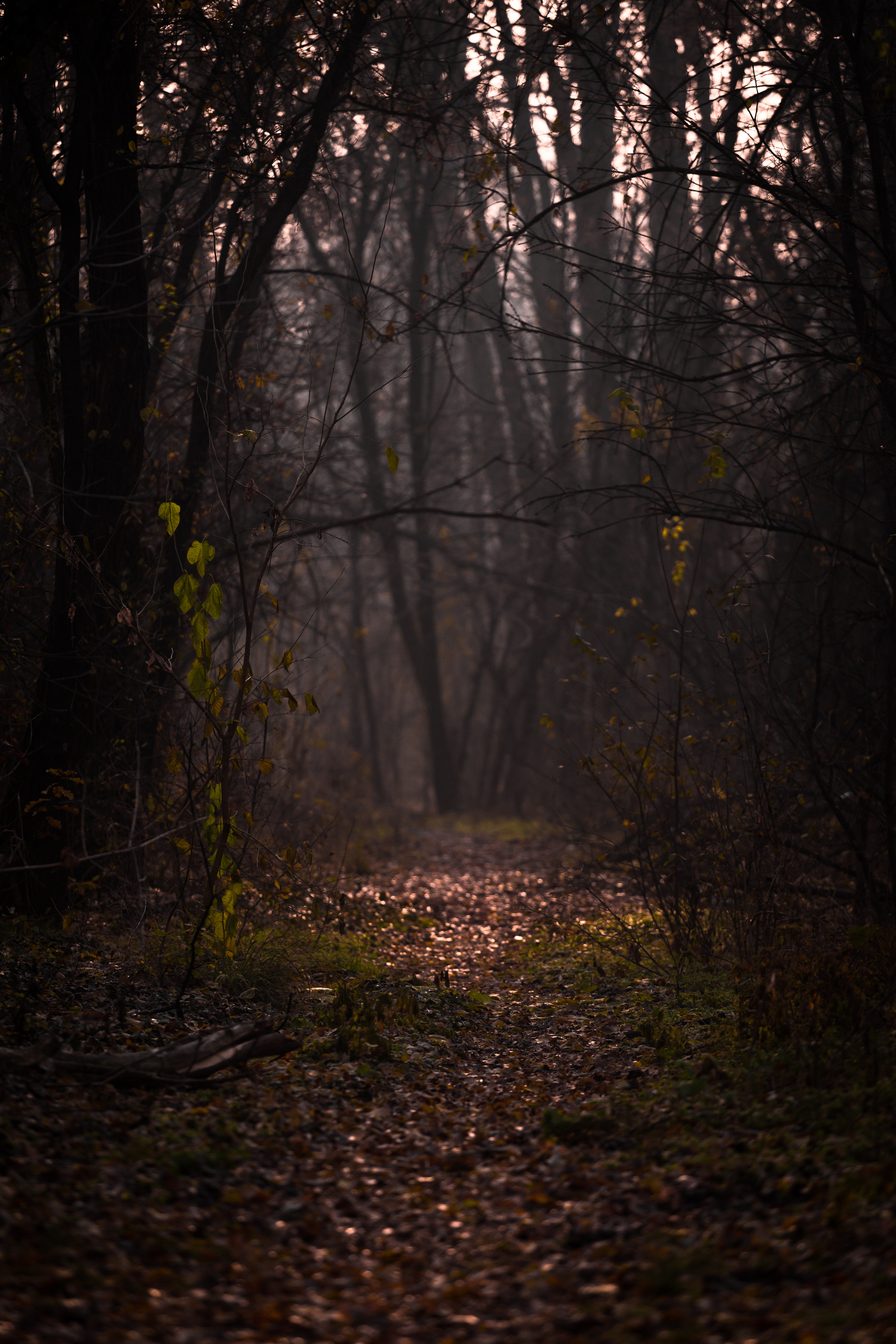 96788 Screensavers and Wallpapers Branches for phone. Download Nature, Autumn, Forest, Fog, Branches, Path, Foliage pictures for free