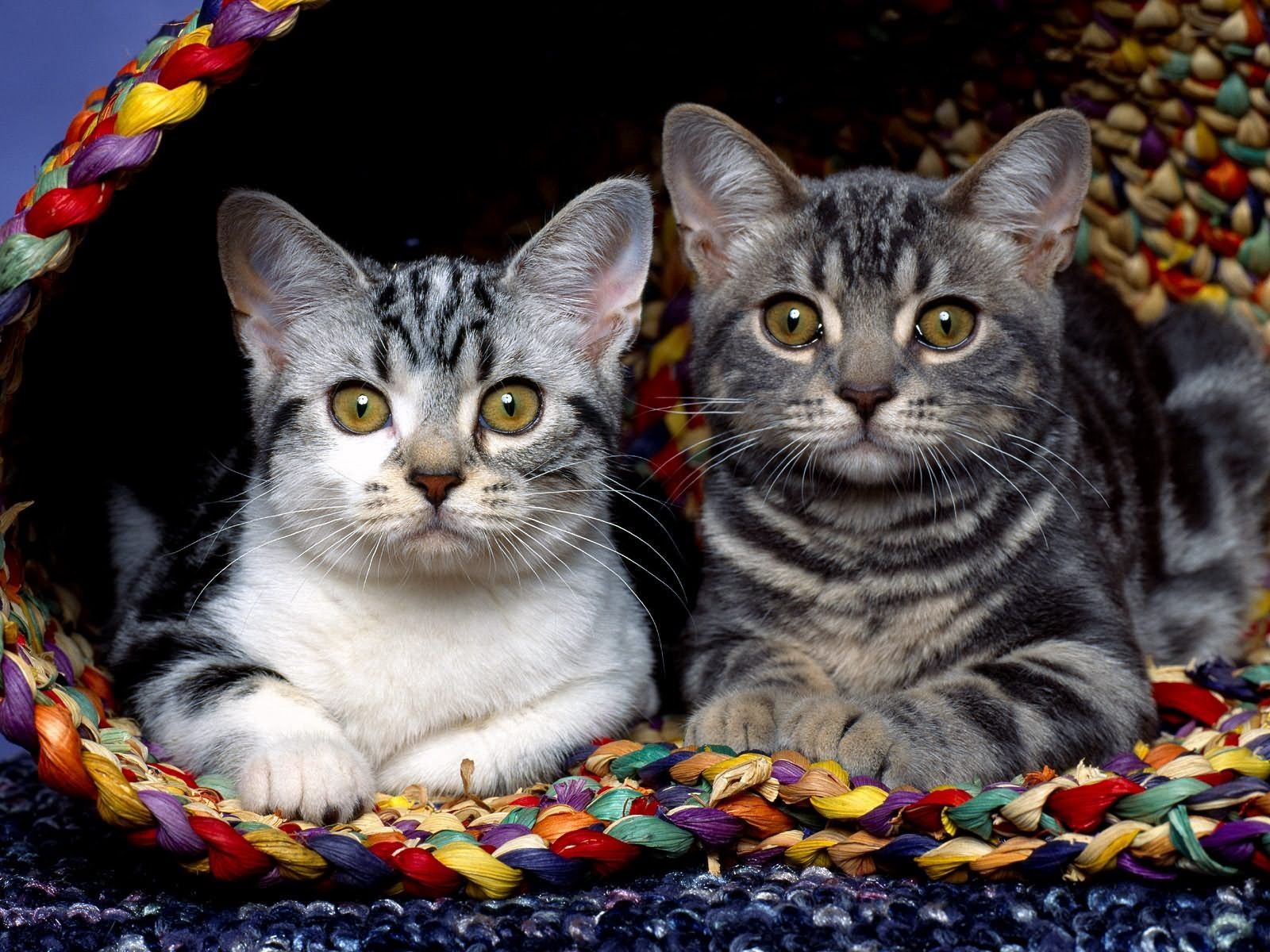 96912 Screensavers and Wallpapers Kittens for phone. Download Animals, Sit, Couple, Pair, Cloth, Kittens pictures for free