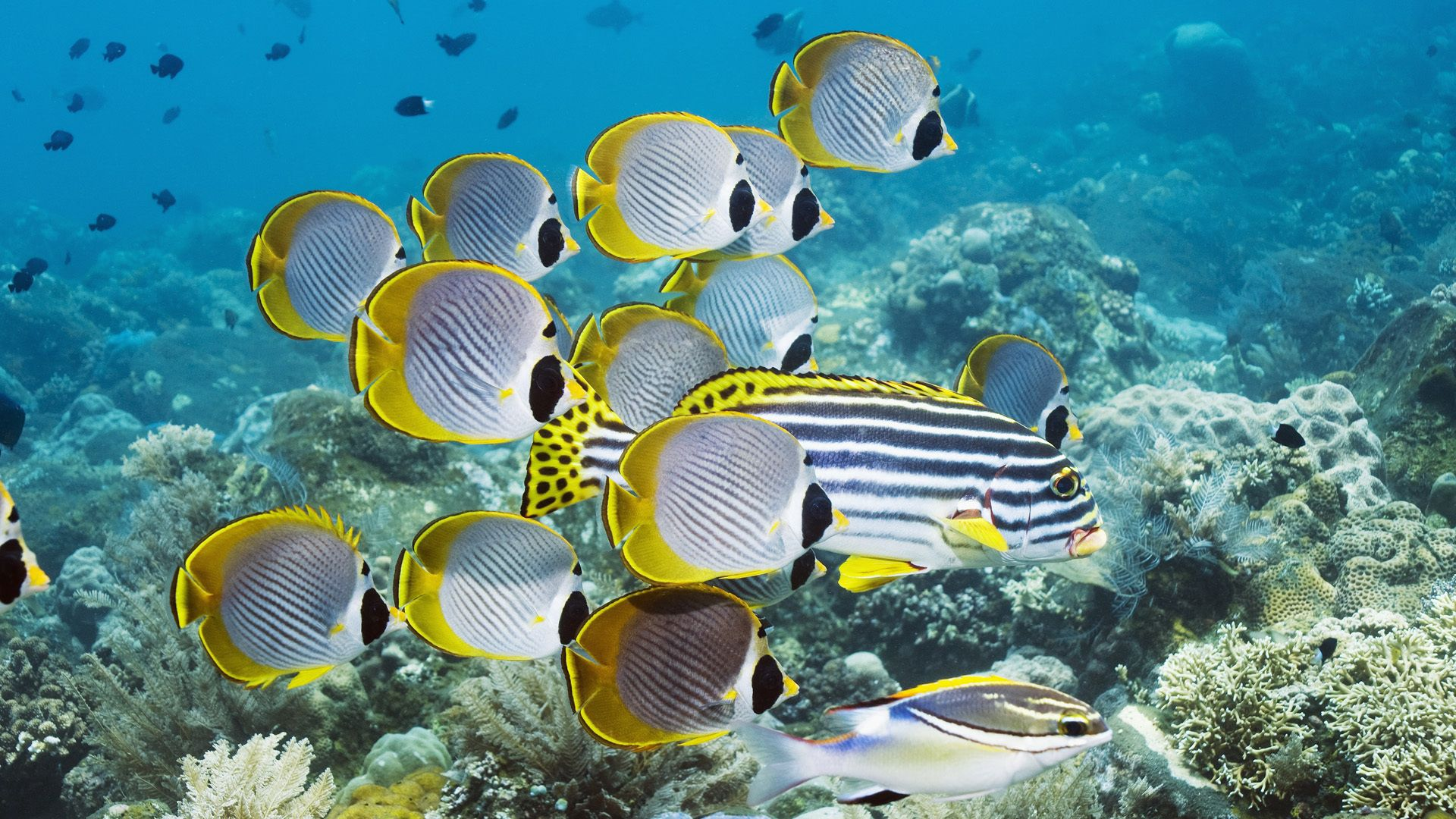 93455 download wallpaper Animals, Underwater World, To Swim, Swim, Ocean, Fish, Coral screensavers and pictures for free