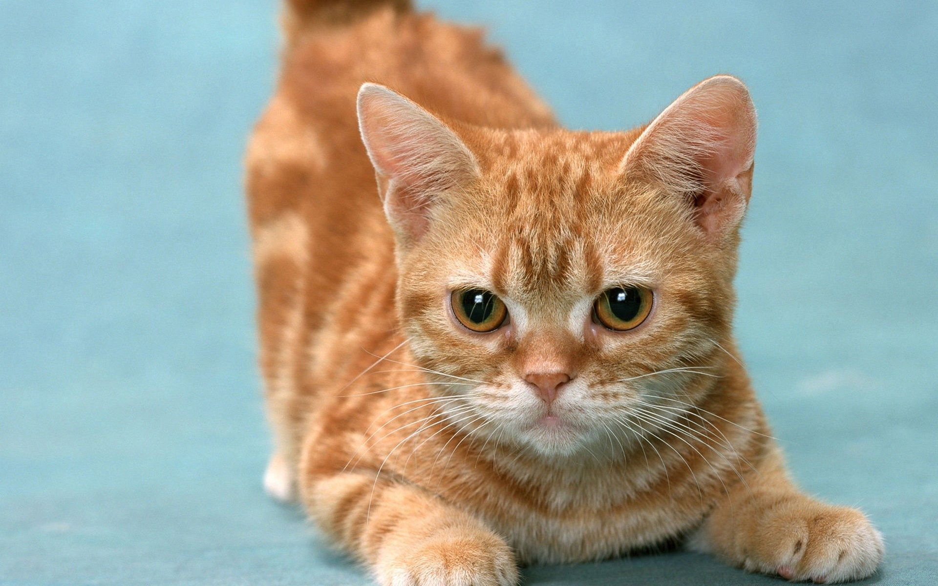 126626 download wallpaper Animals, Kitty, Kitten, Striped, Playful, Nice, Sweetheart screensavers and pictures for free