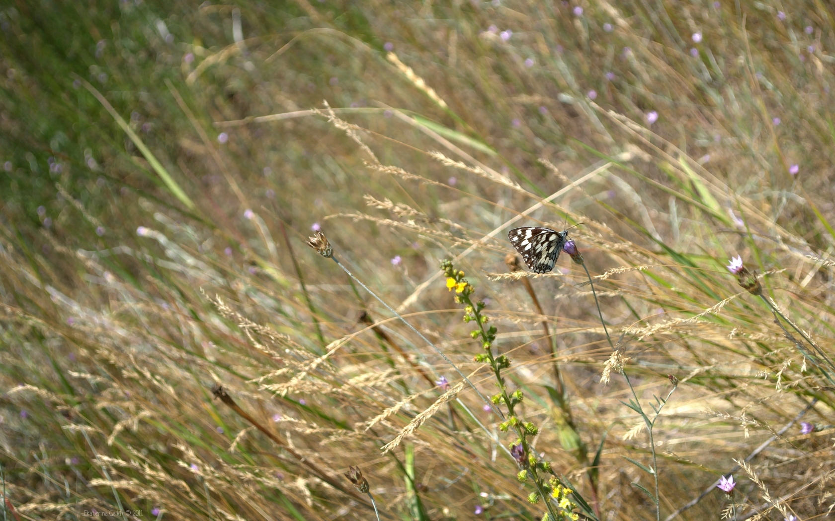 29574 скачать обои Бабочки, Трава, Насекомые - заставки и картинки бесплатно